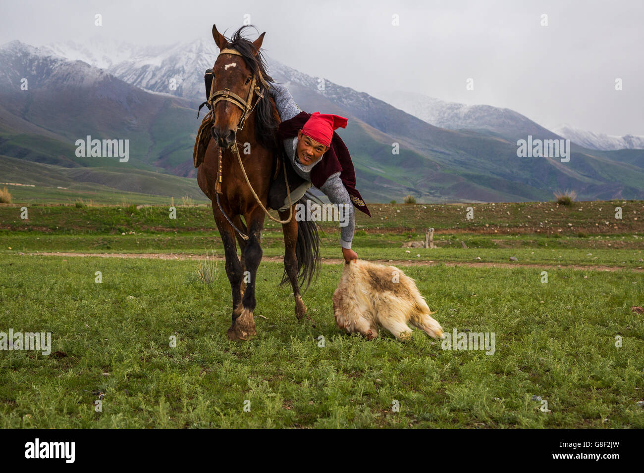 Nomad horse rider grabs the goat carcass during the traditional horse games of Ulak Tartysh. - Stock Image