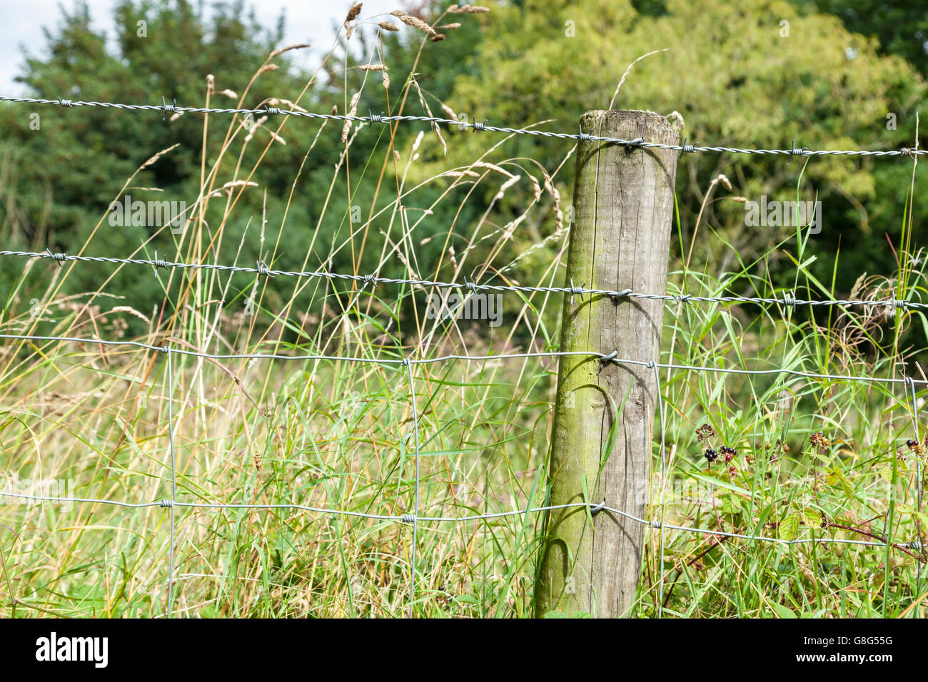 Close up of a barbed wire fence stapled to a wooden post at the edge of a field in the countryside, Derbyshire, - Stock Image