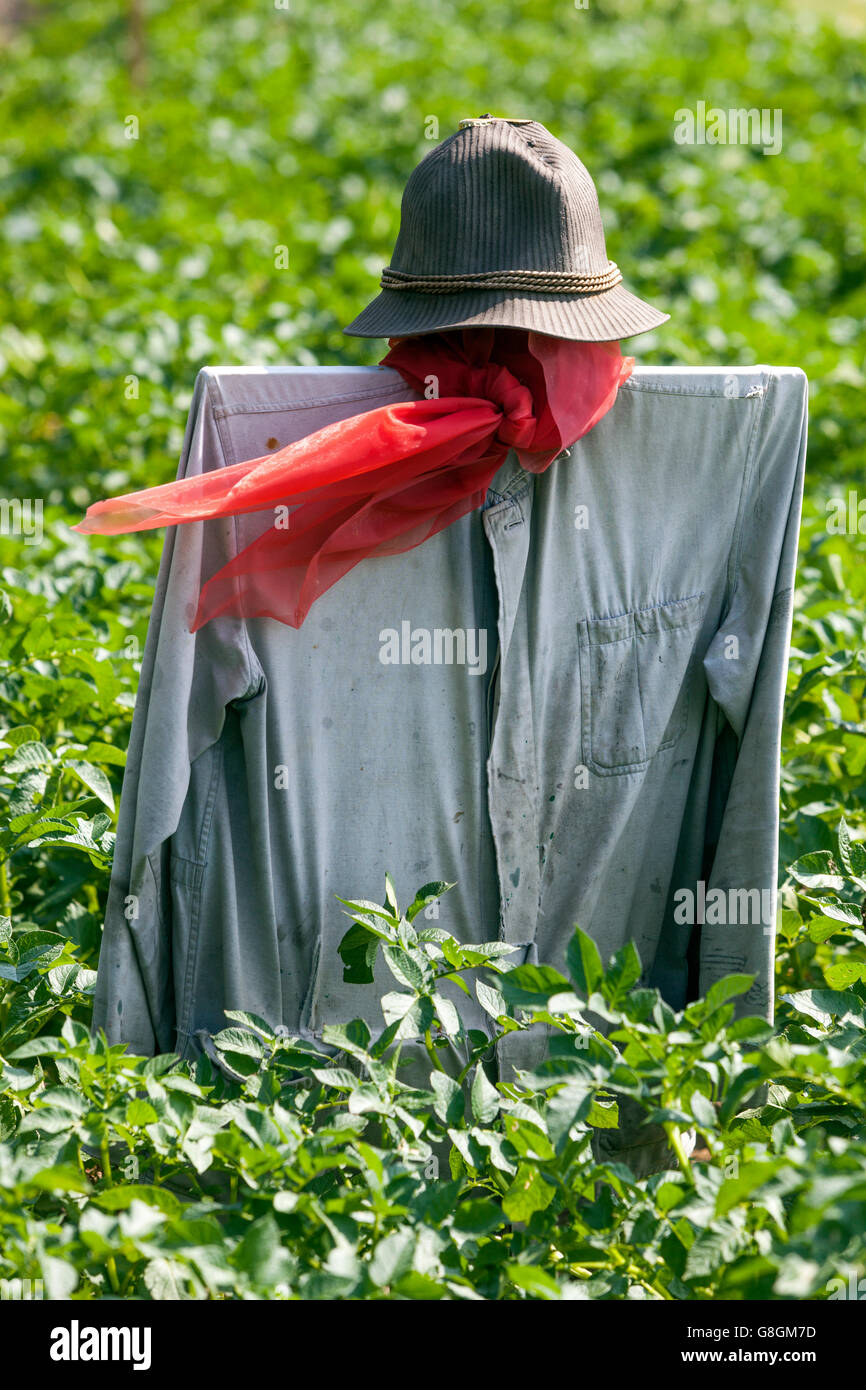 Scarecrow with red scarf fluttering in the wind, a potato  field - Stock Image