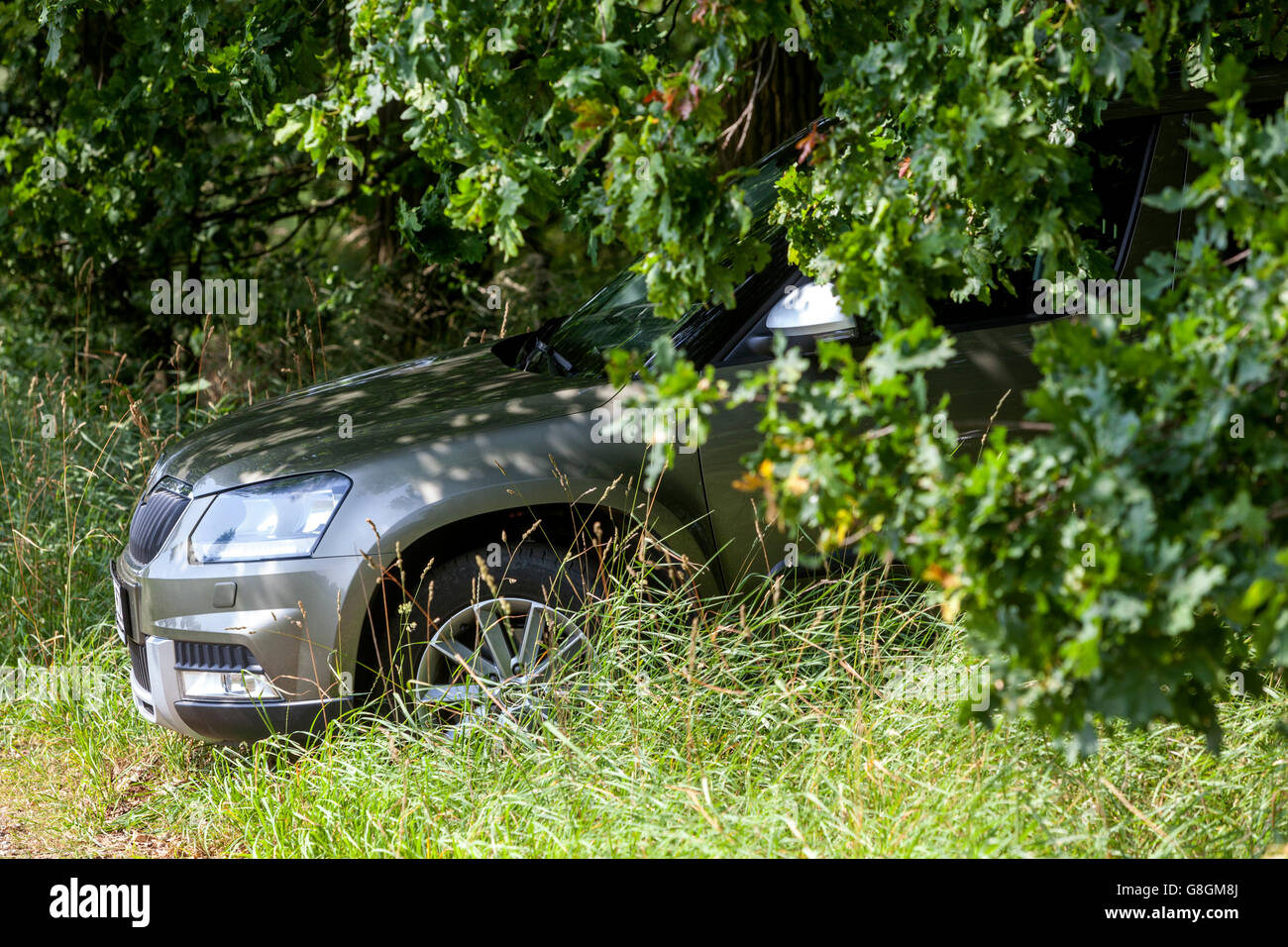 passenger car parked at the edge of oak forest under trees - Stock Image