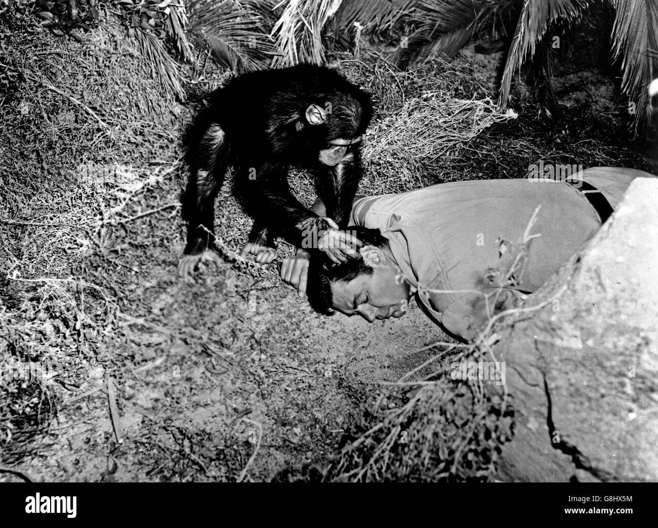 Cannibal Attack, USA 1954, Regie: Lee Sholem, Darsteller: Johnny Weissmuller mit Schimpanse Kimba - Stock Image