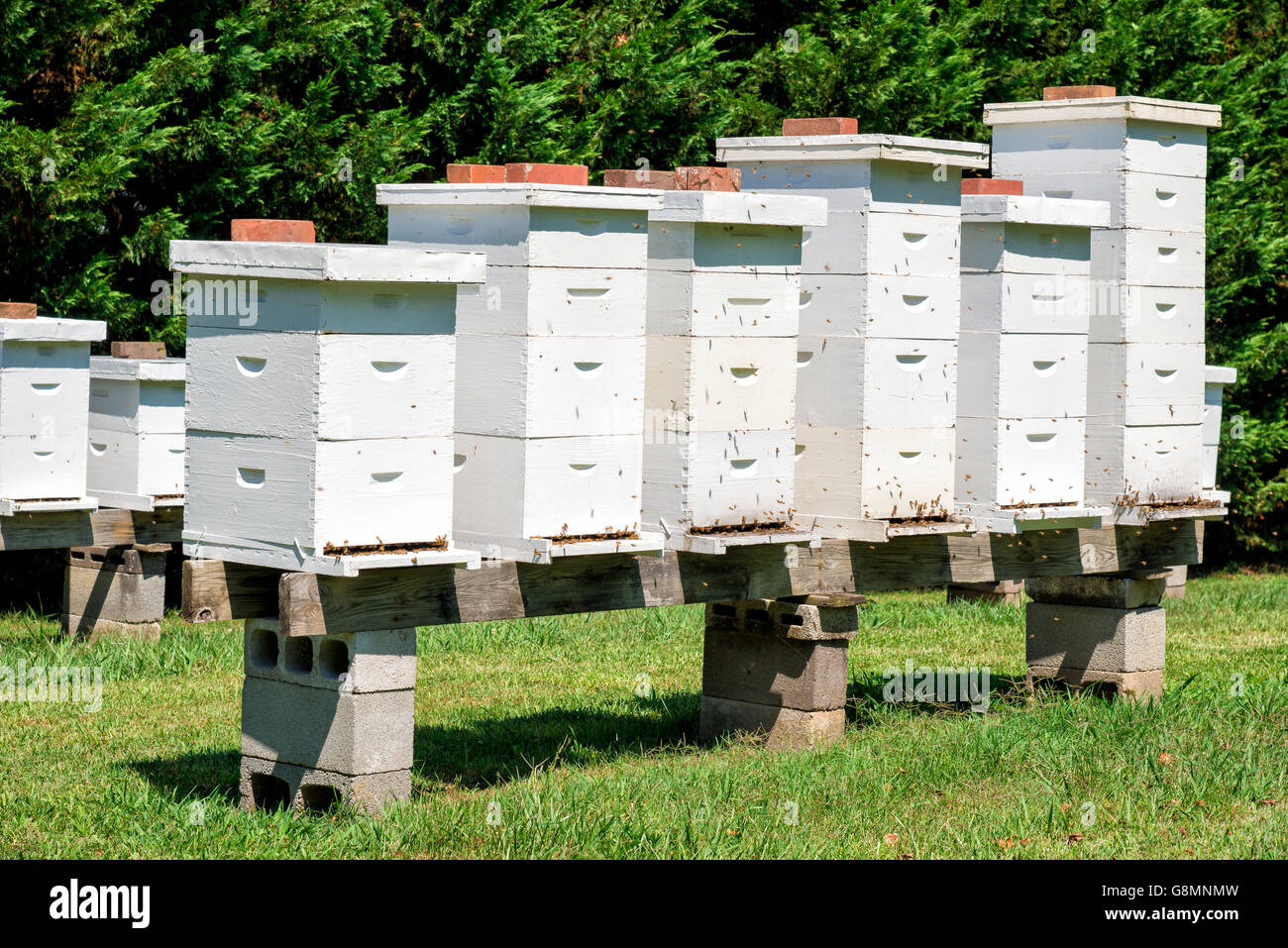 Many beehives in a row full of bees stock photo 108635545 for Hive container homes