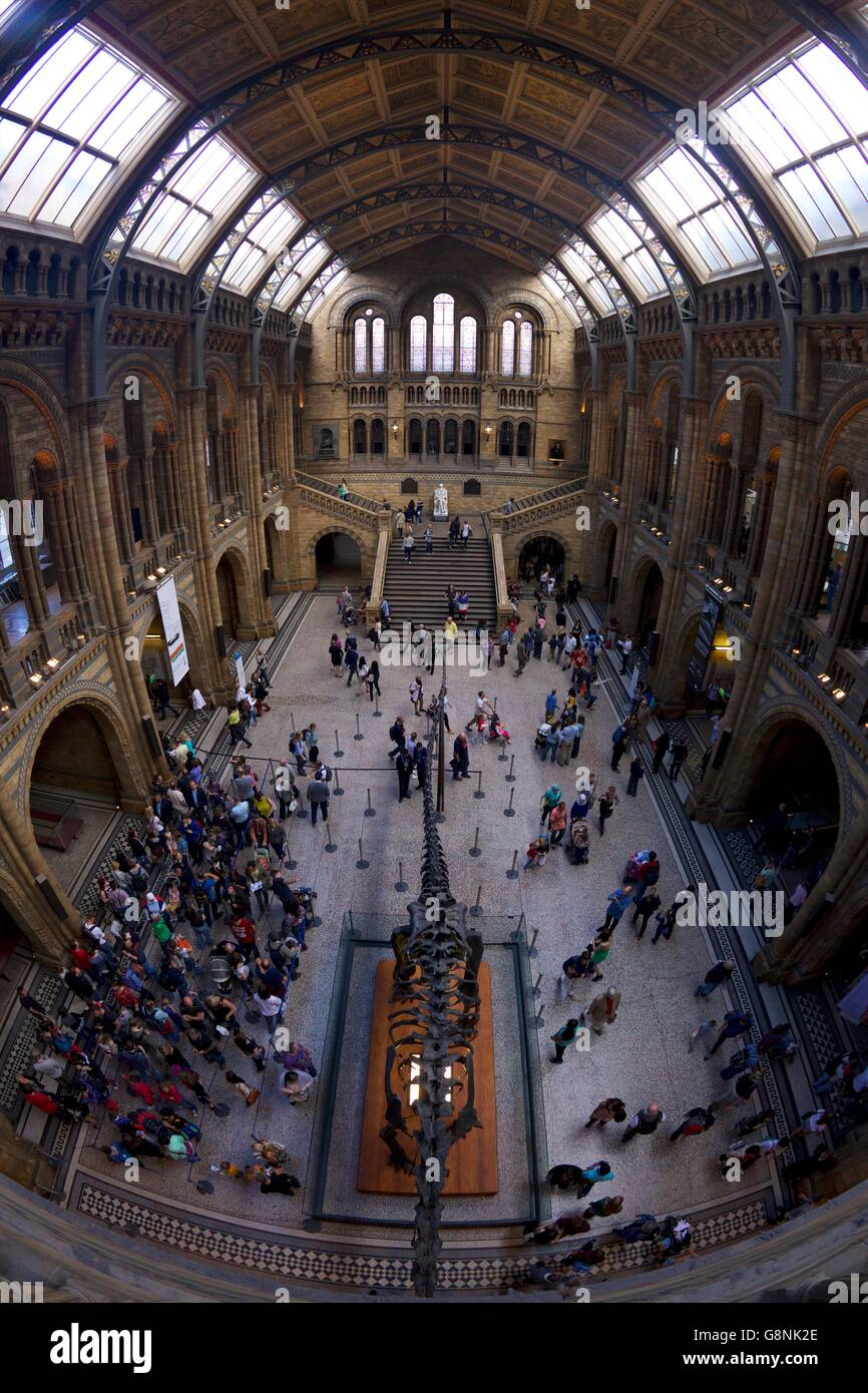 Central Hall, Natural History Museum,  South Kensington, London, England, UK, - Stock Image