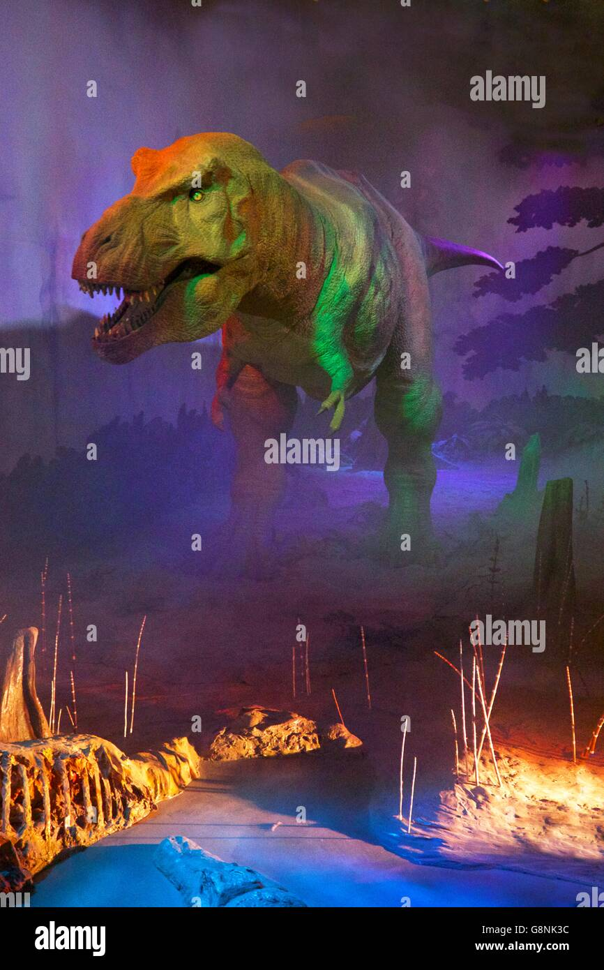 Model of Tyrannosaurus Rex, Dinosaur gallery, Natural History Museum,  South Kensington, London, England, UK - Stock Image