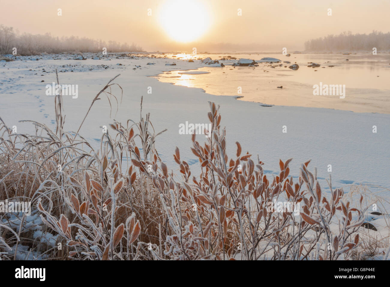 Morning sun over a river with ice and snow, fog is over the water, bushes having orange colored leaves, Kiruna, - Stock Image