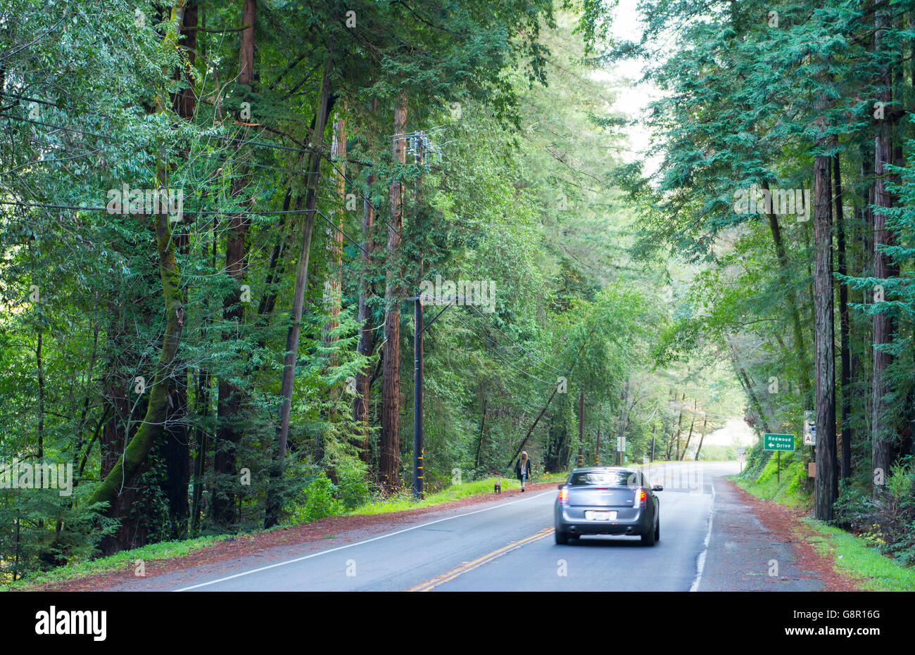 Guerneville Calfornia redwoods on road near Northwood in Russian River Valley Sonoma County CA Stock Photo