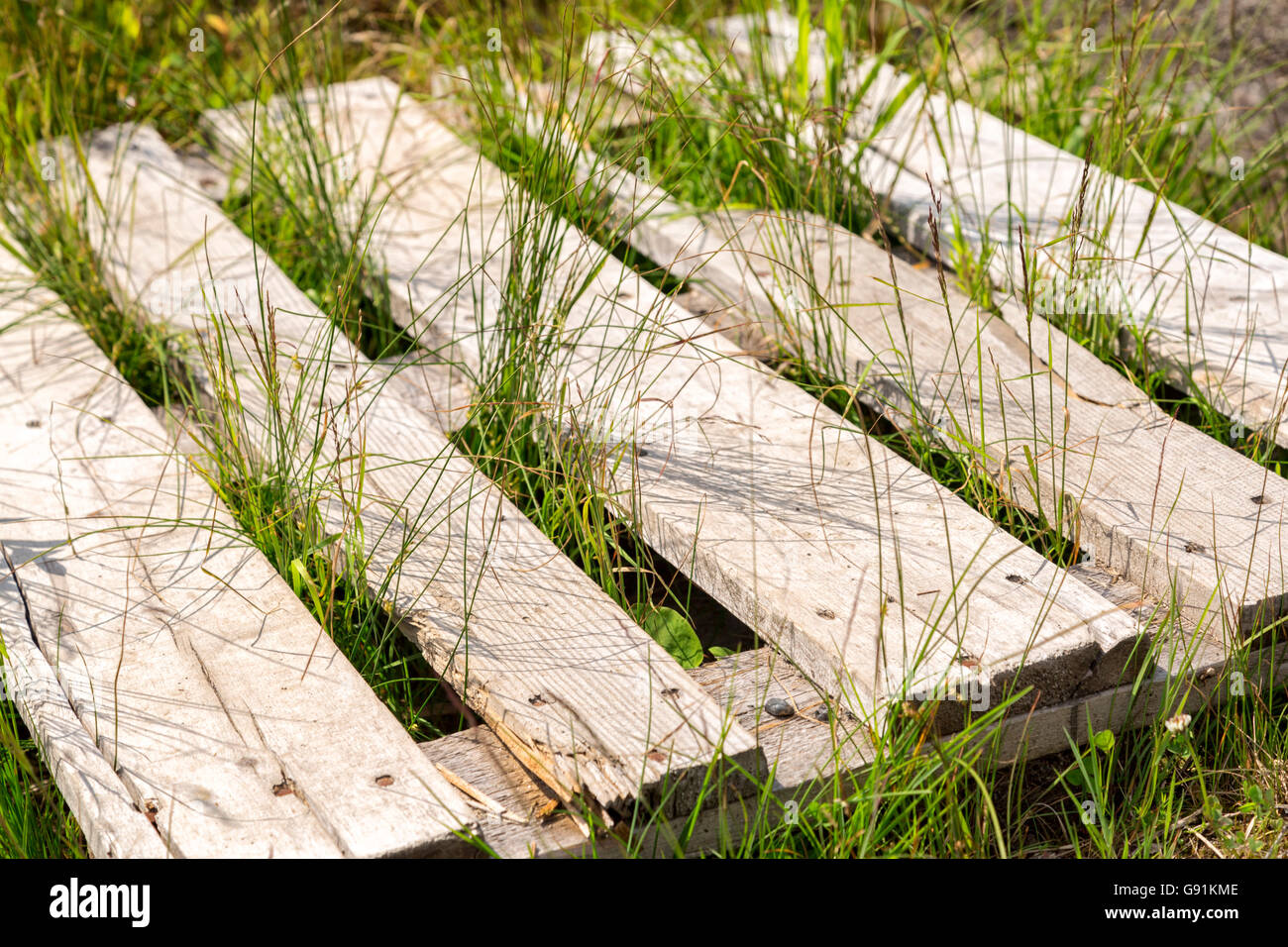 Box Pallet in Grass close up. - Stock Image