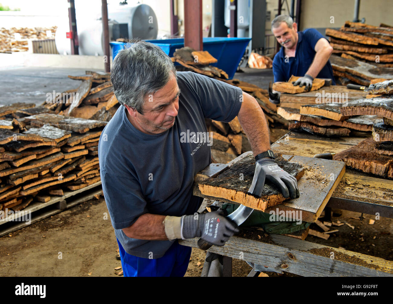Bark of the cork oak (Quercus suber) is cut manually, cork factory Novacortiça, São Brás de Alportel, - Stock Image