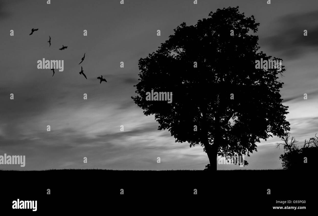 Silhouette - Stock Image