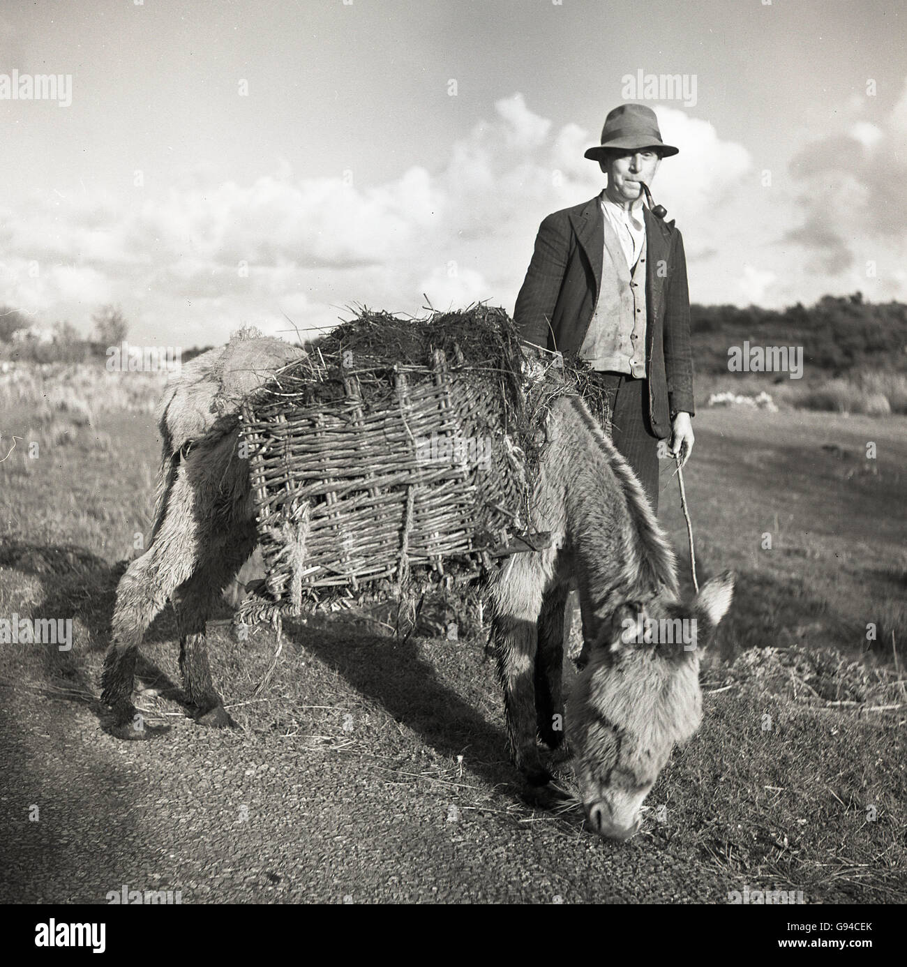 1950s, historical, a rural irishman wearing hat and smoking a pipe with his donkey. - Stock Image