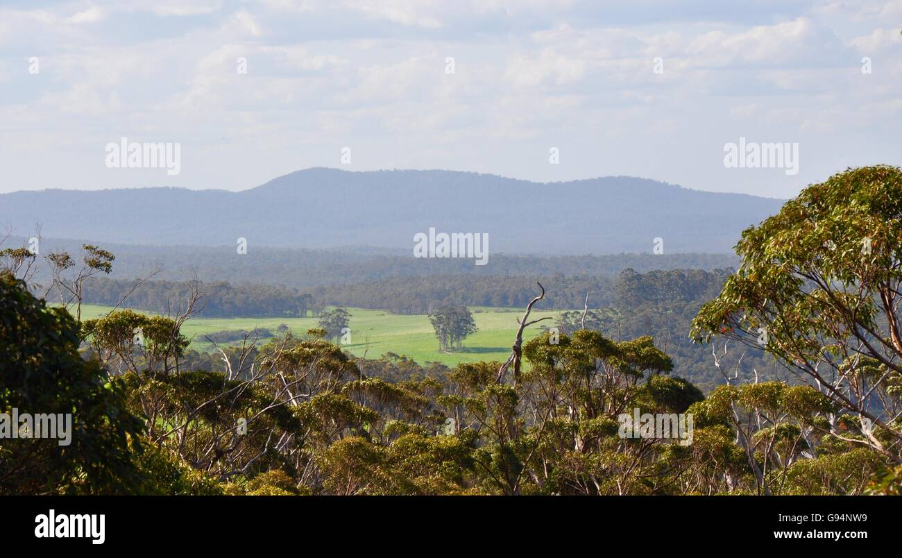 View from the Tree Top Walk at the Valley of the Giants overlooking the tree top landscape in Denmark, Western Australia. - Stock Image
