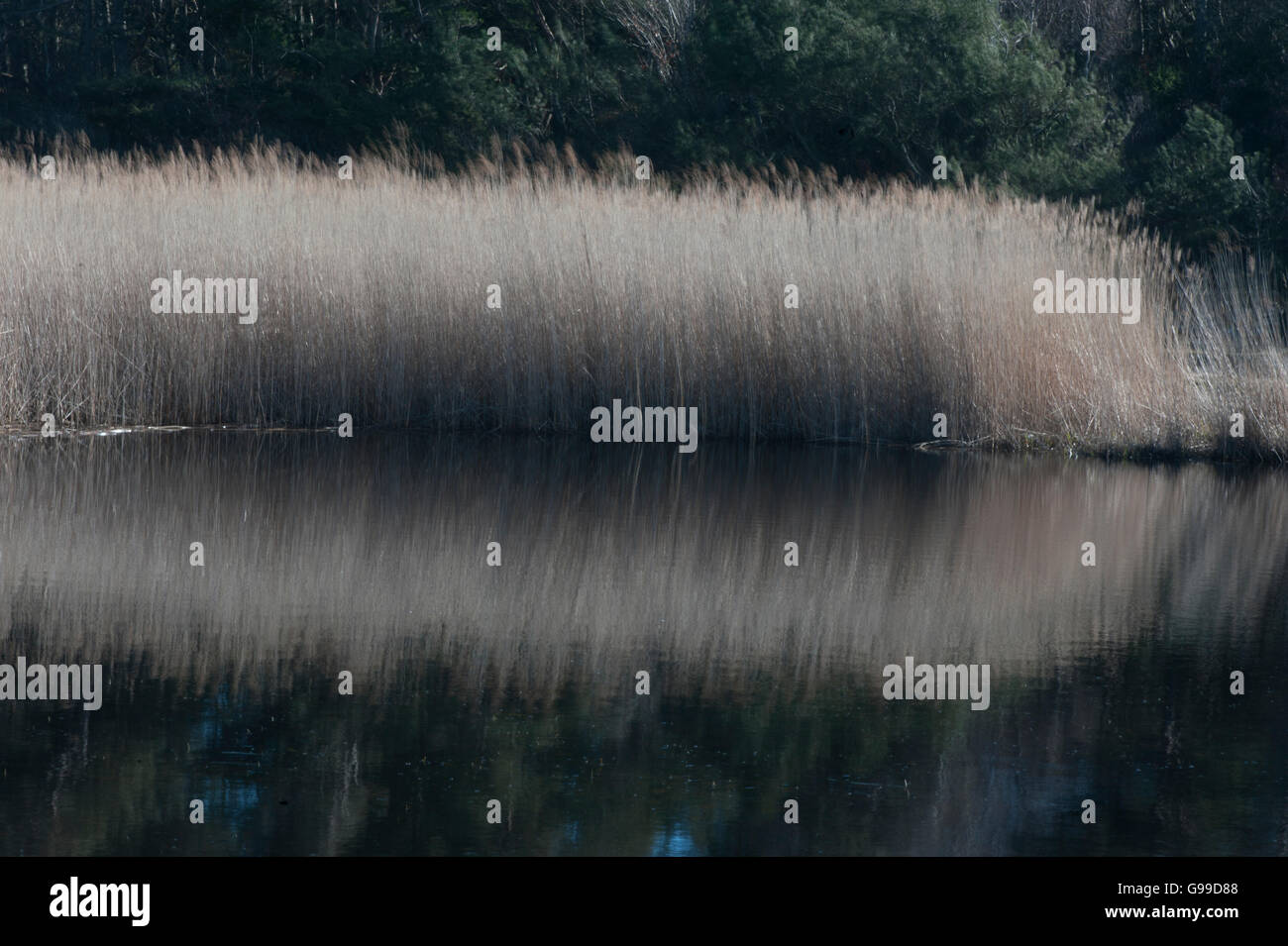 Lake in Sweden Stock Photo