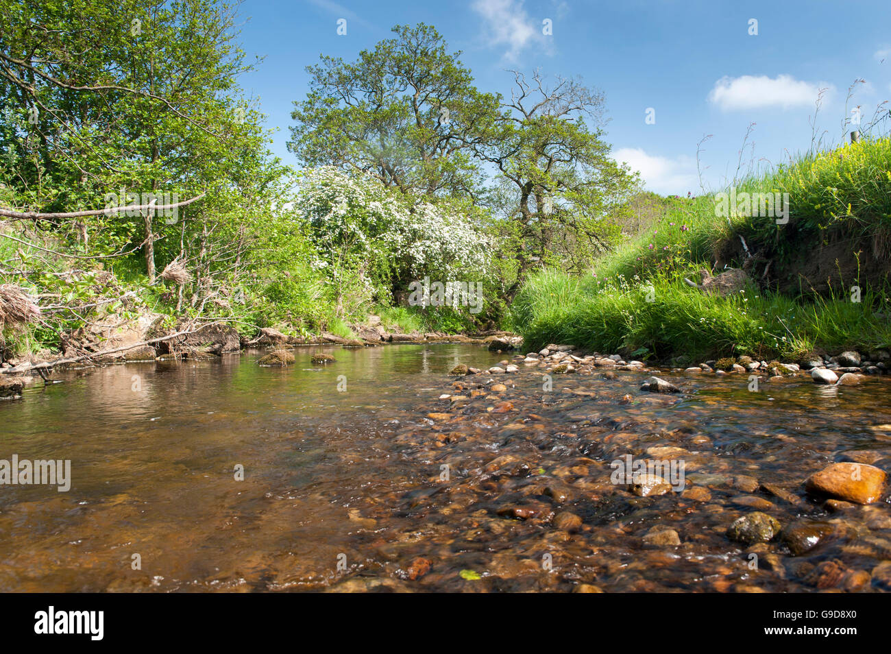 Small, clear unpolluted stream at a field edge, Forest of Bowland, Lancashire, UK - Stock Image