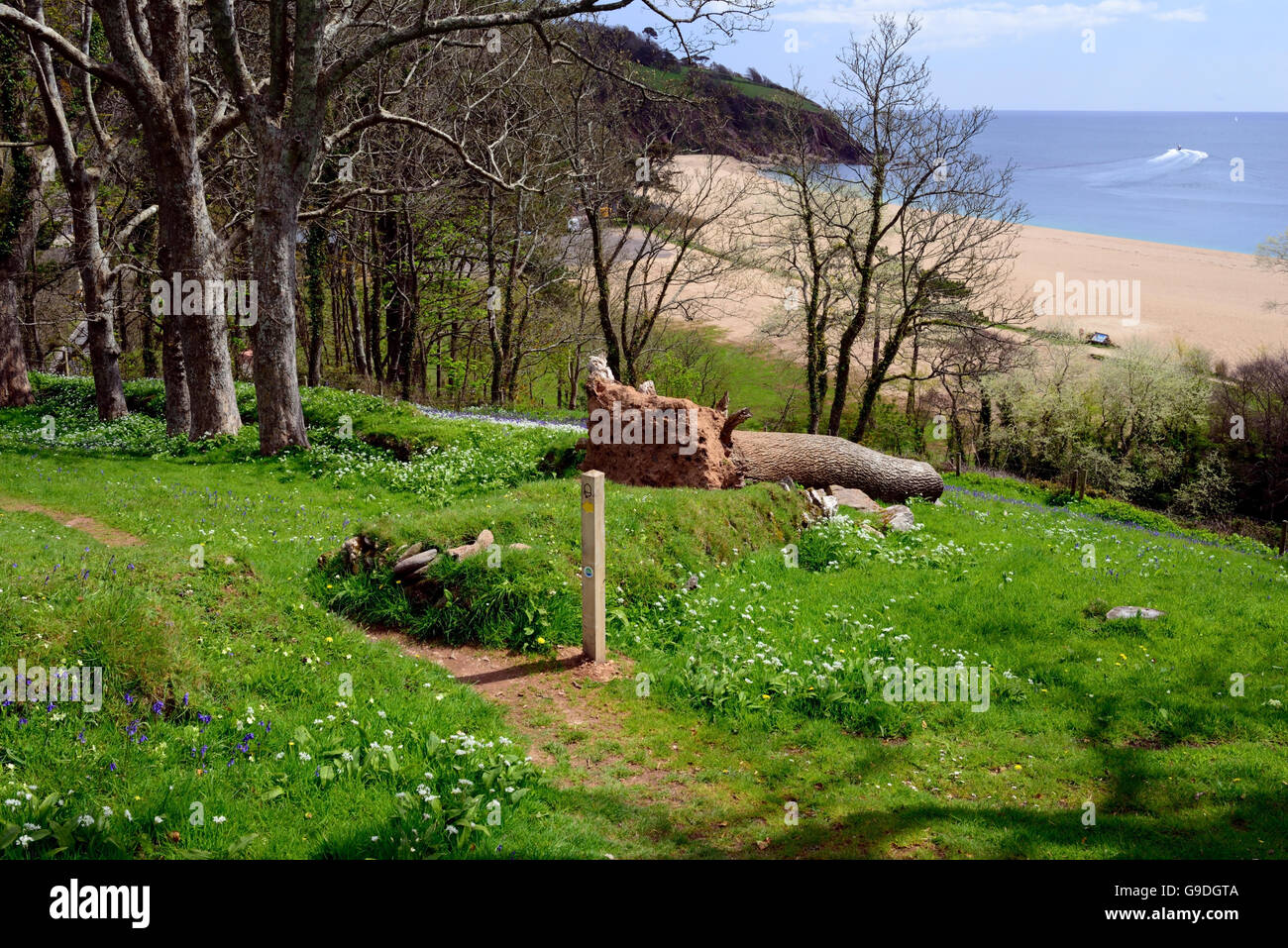 Waymarker post and fallen tree beside the South West Coast Path above Blackpool Sands. - Stock Image