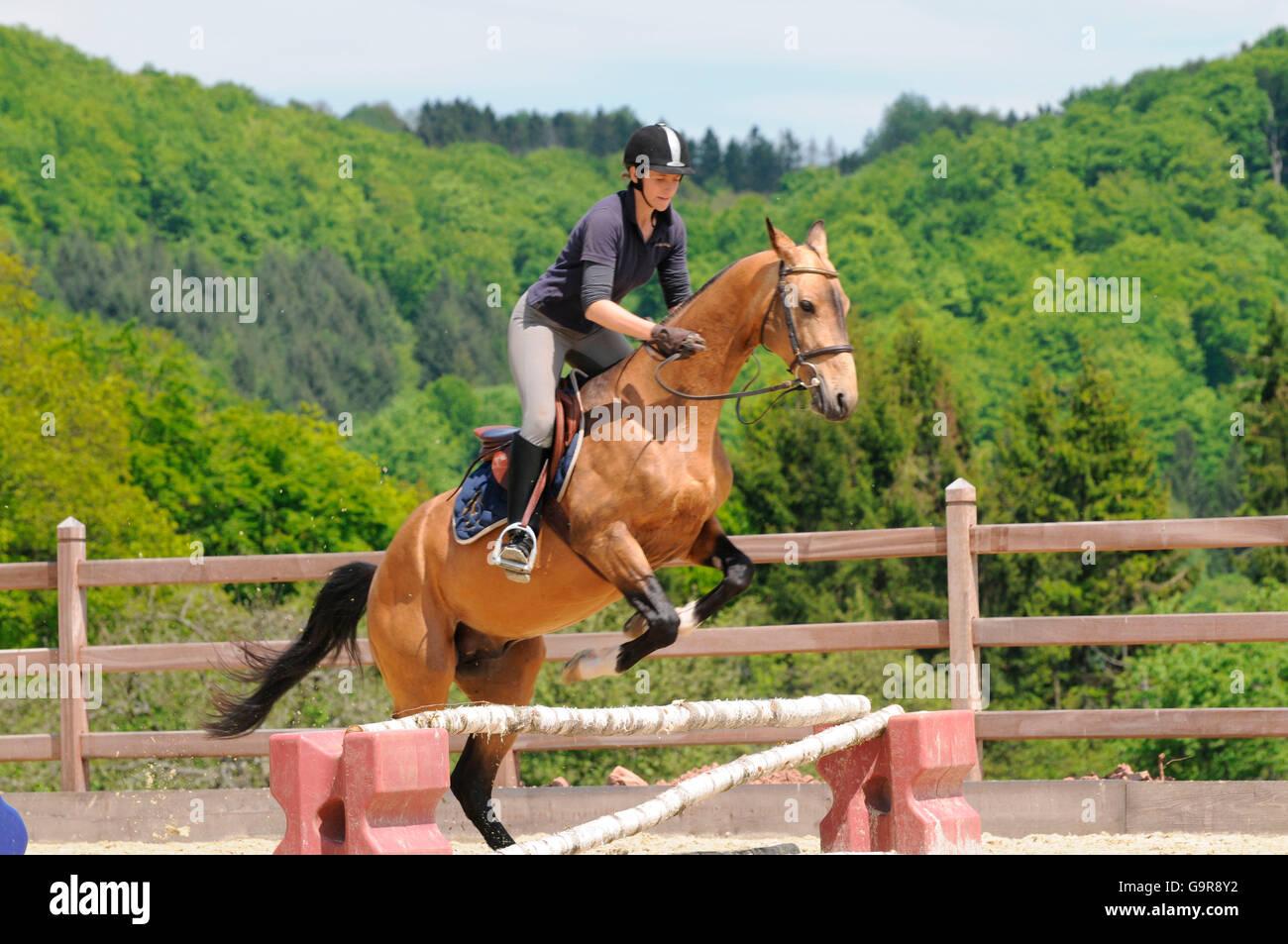 Teke Akhal jumping pictures
