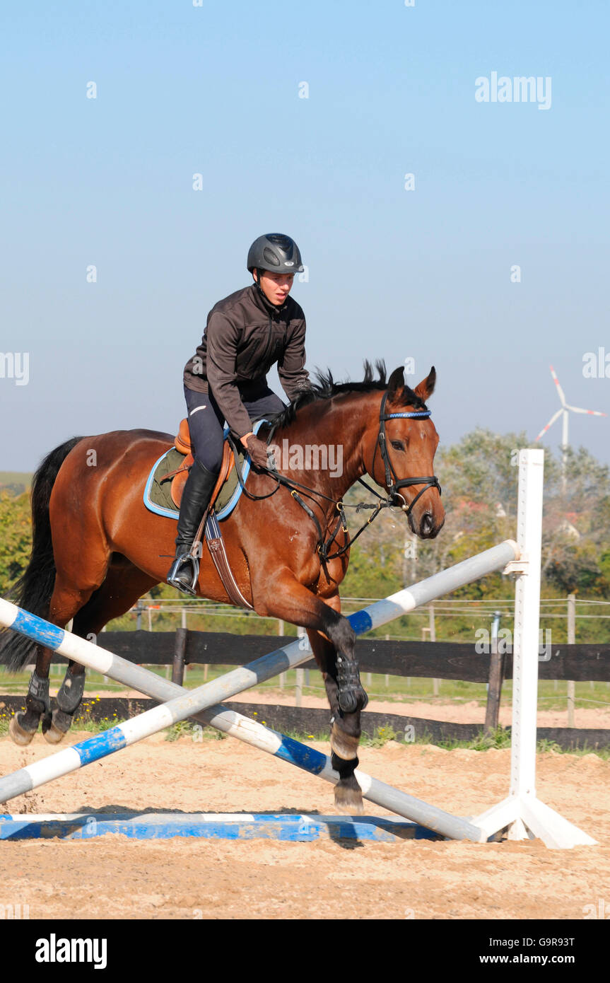 Rider with German Warmblood, showjumping training / bay, riding arena, obstacle, riding helmet - Stock Image