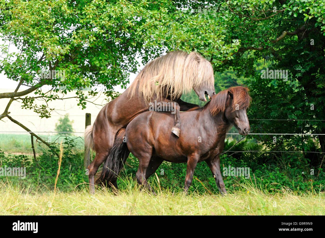 Horse stallion porn