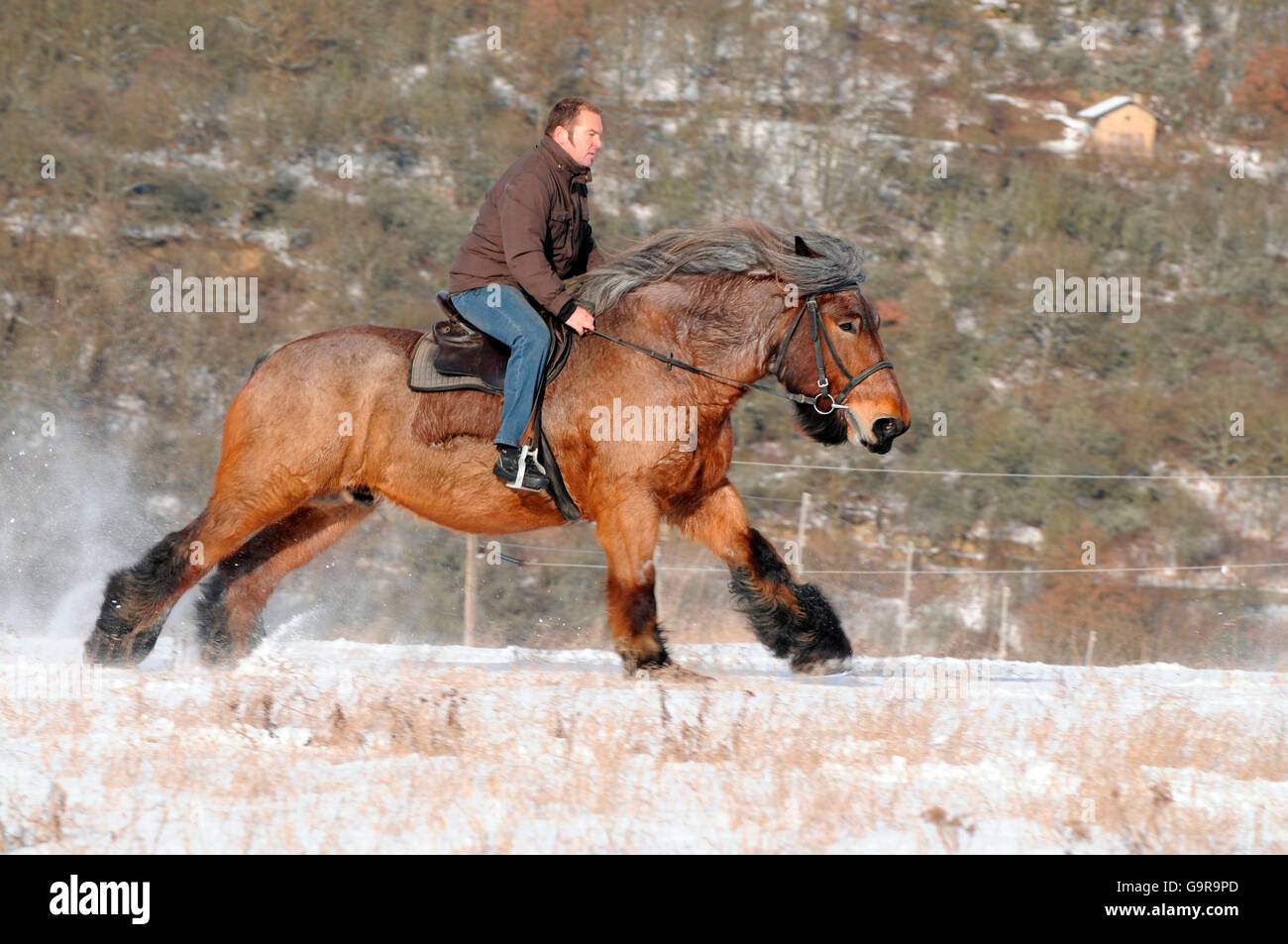Trail Riding Man Riding Draft Horse Rider Draught Horse Side Stock Photo Alamy
