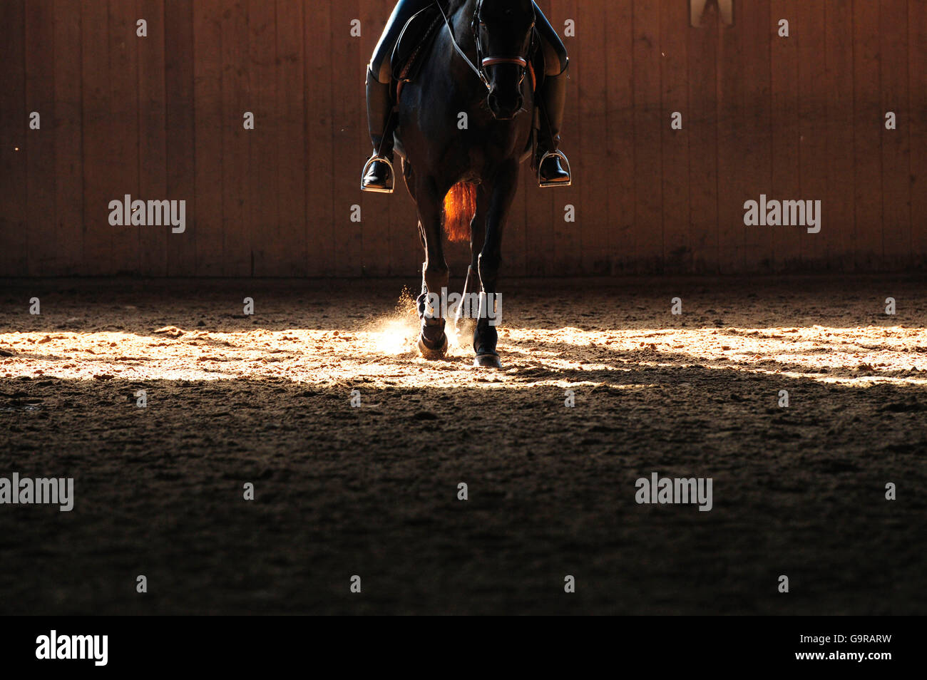 Equestrian Sports, indoor riding arena - Stock Image