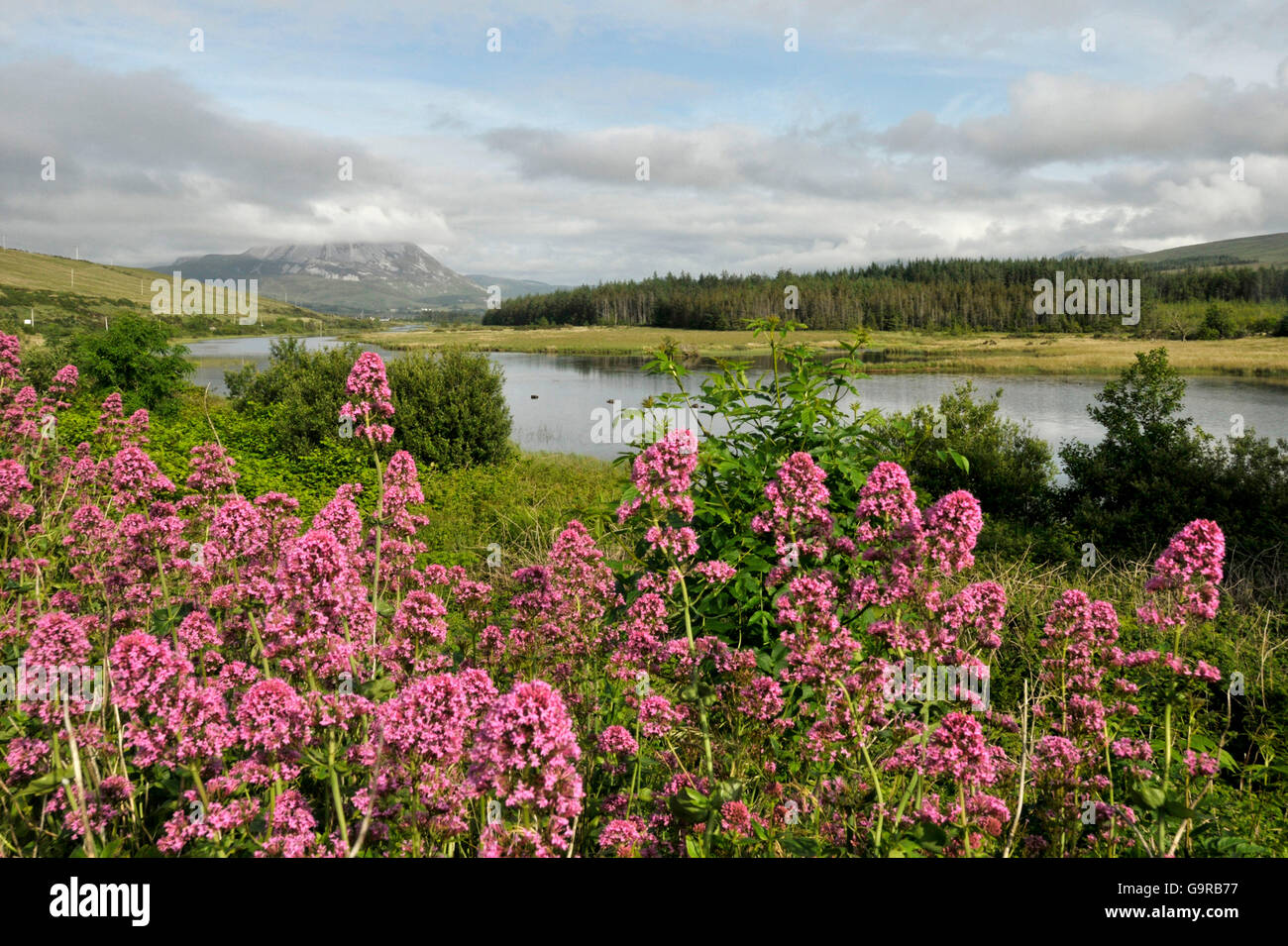 View of Mount Errigal from Gweedore, County Donegal, Ireland / Clady River - Stock Image