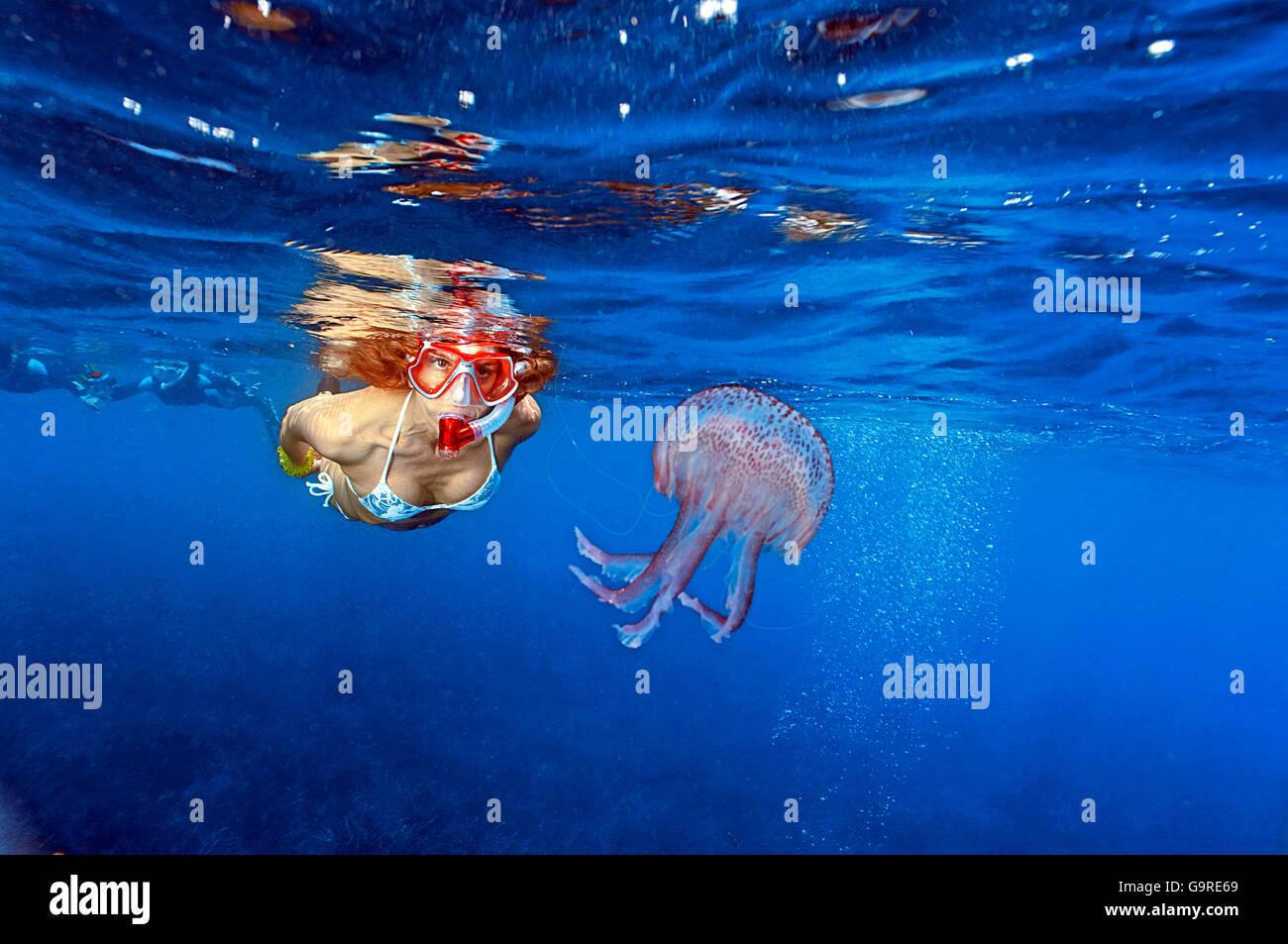 Snorkeler with Jellyfish / (Pelagia noctiluca) - Stock Image