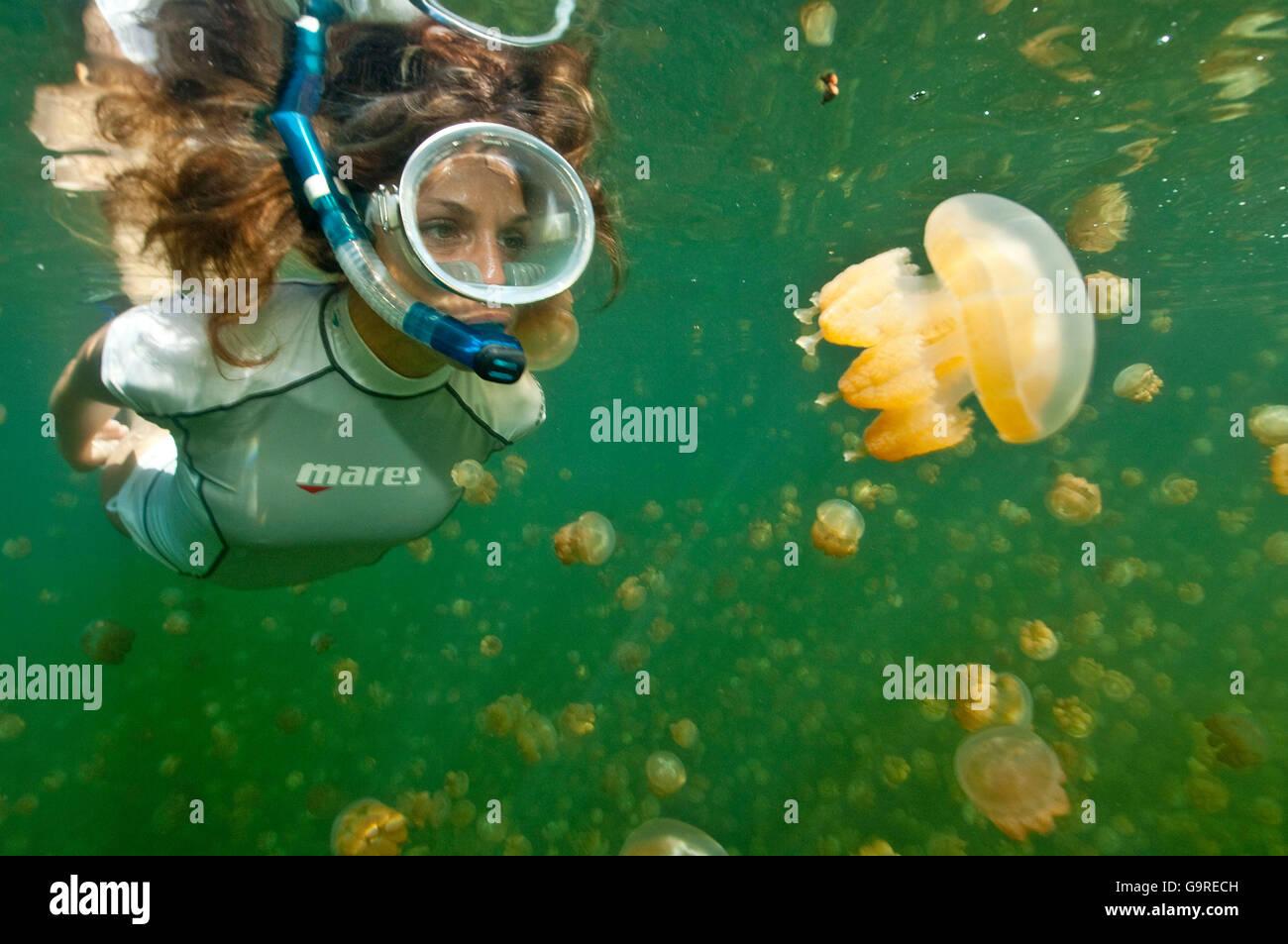 Snorkeler in Jellyfish Lake, Palau,, Micronesia / (Mastigias papua) Stock Photo