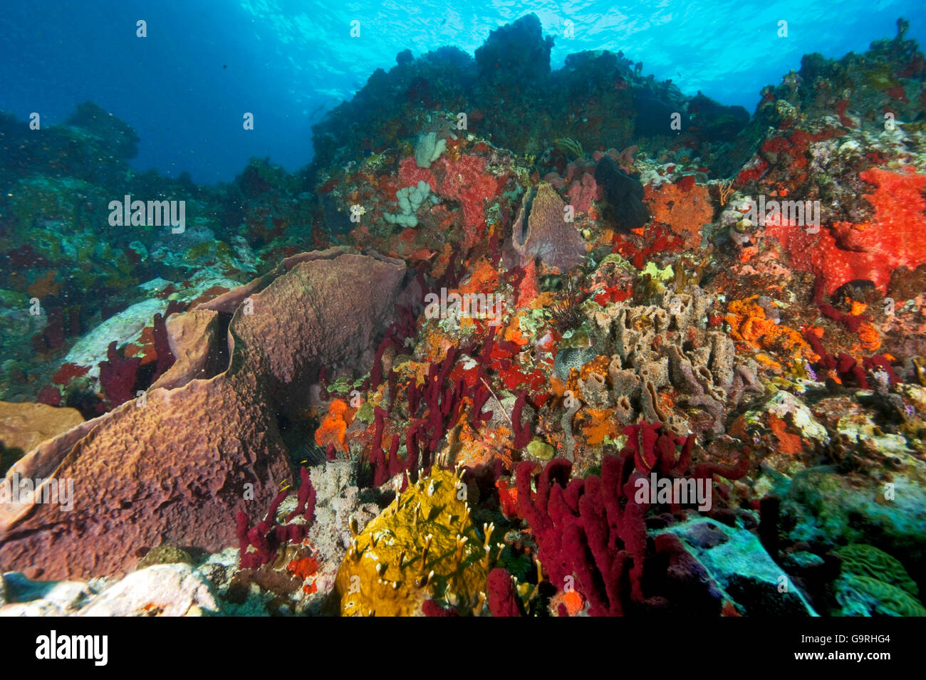 Coral reef, sponges, soft corals, Carriacou and Petite Martinique, Grenada / leeward islands - Stock Image
