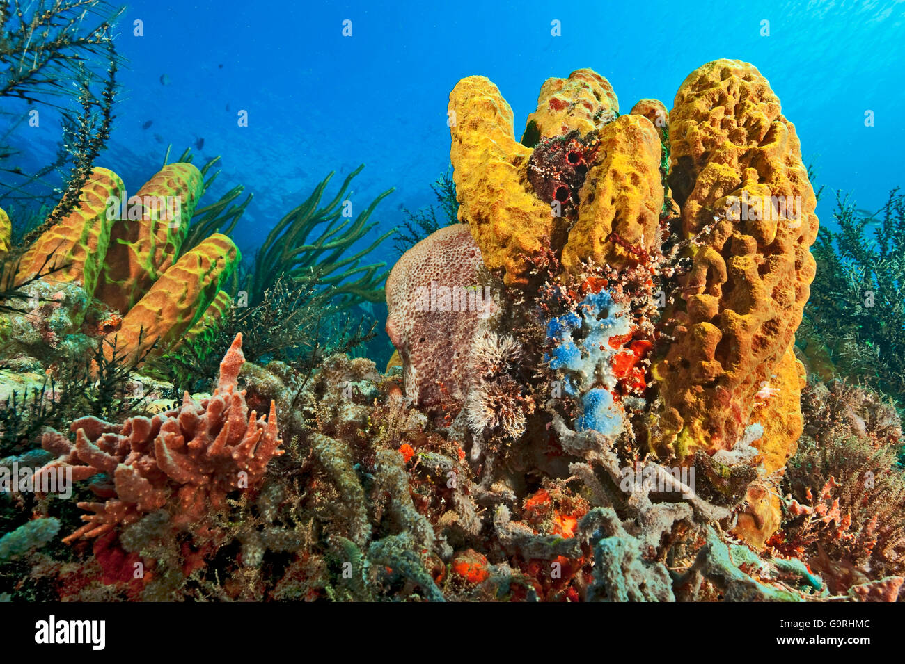 Coral reef, sponges, soft coral - Stock Image