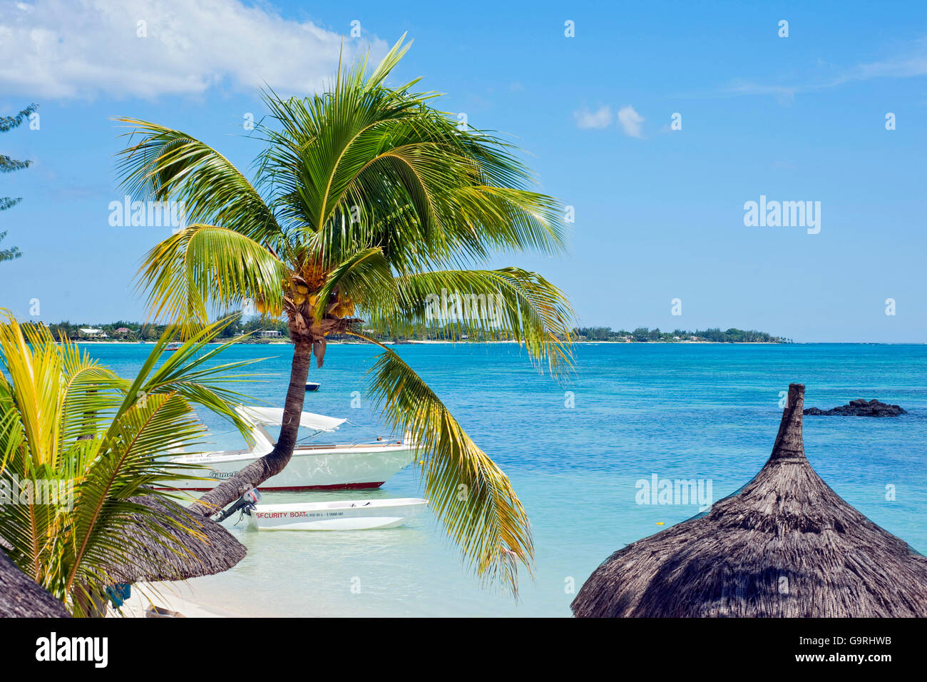 boat and palmtree, Pereybere, Mauritius, Africa, Indian Ocean / Pereybere - Stock Image