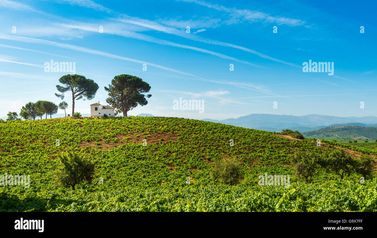 Vineyard Bierzo, Spain - Stock Image