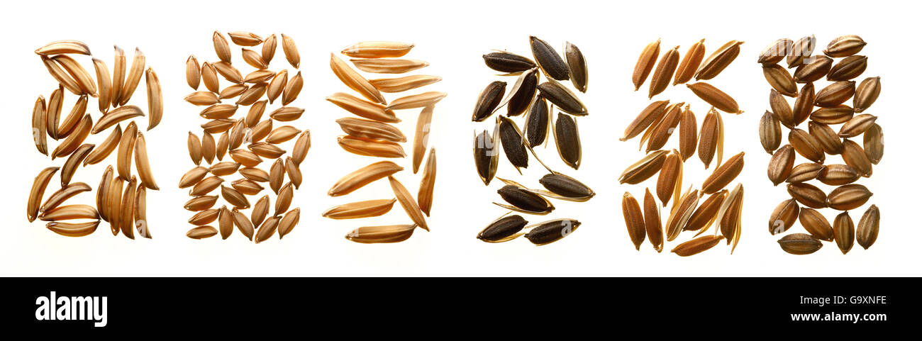 Different varieties of rice seeds, showing variation in shape and colour morphology. - Stock Image