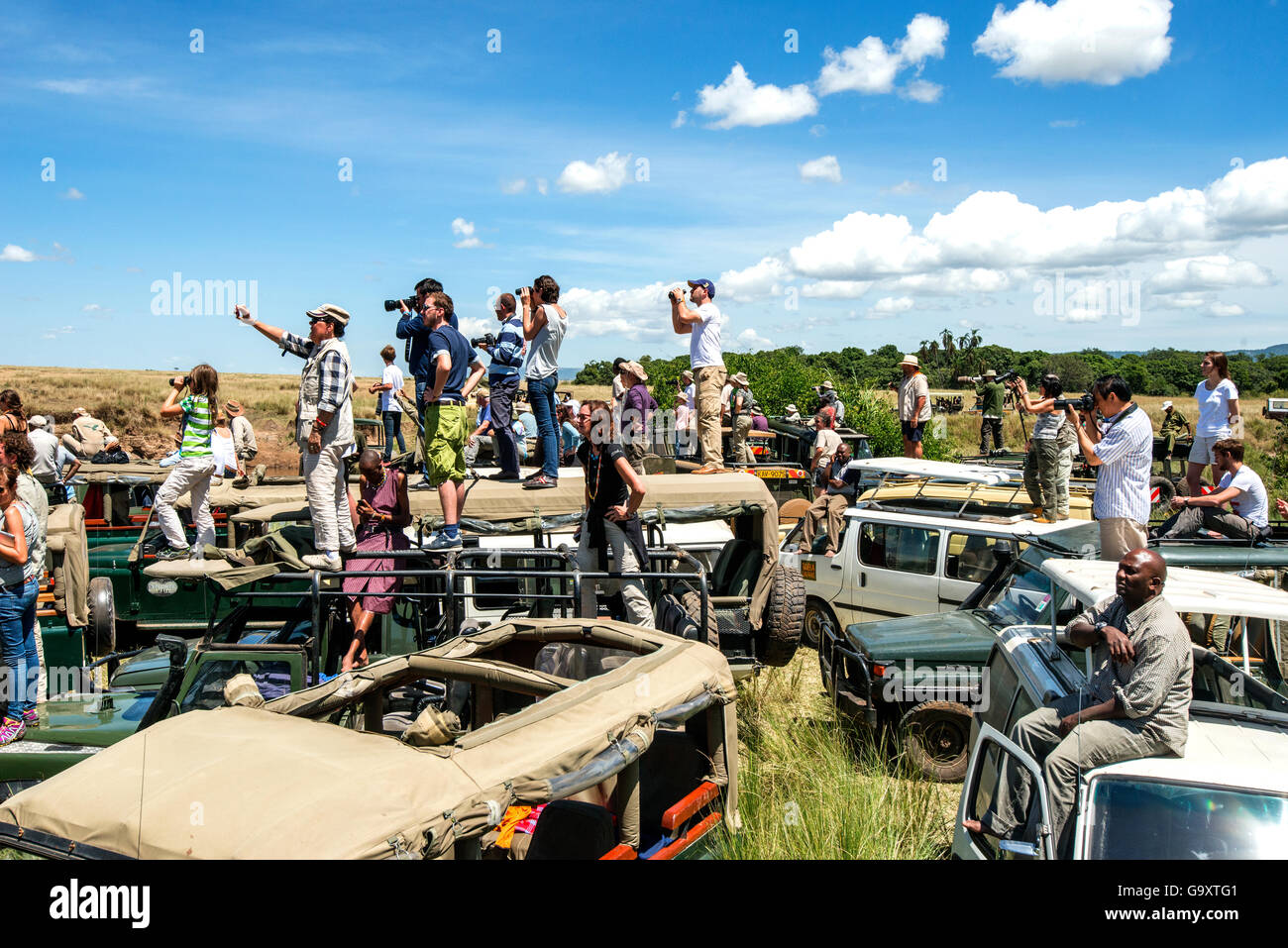 Congestion of tourist safari cars, at crossing spots along the Mara River during the great migration season.  Masai - Stock Image
