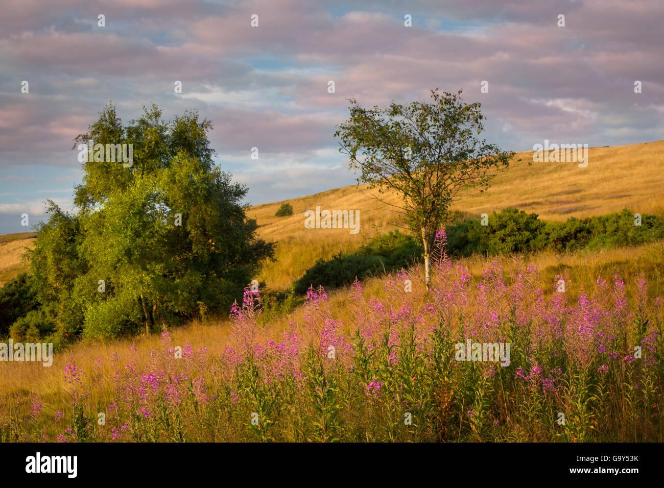Dawn over Arthur's Seat hillside, Edinburgh, Lothian, Scotland - Stock Image