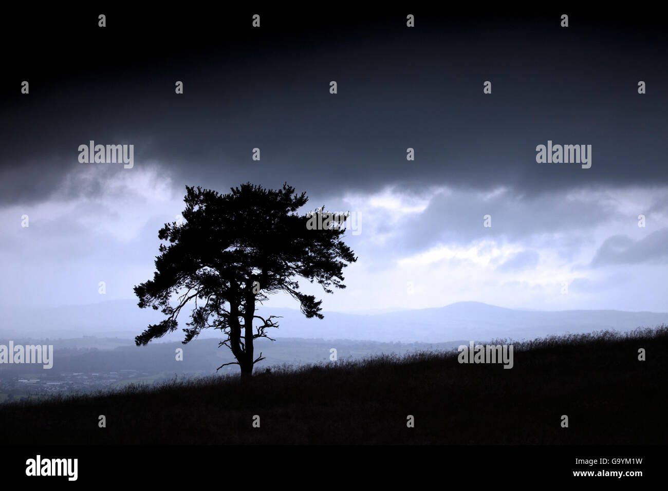 Denbighshire, UK 4th July 2016. UK Weather – Isolated tree with vale of clwyd in distance - Stock Image