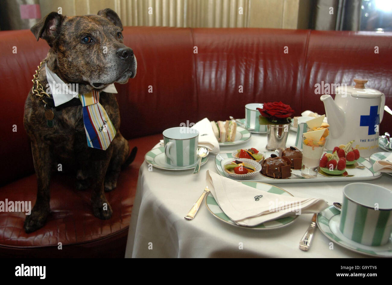 The Blue Cross Launching Britain's Biggest Tea Party for Pets - Stock Image
