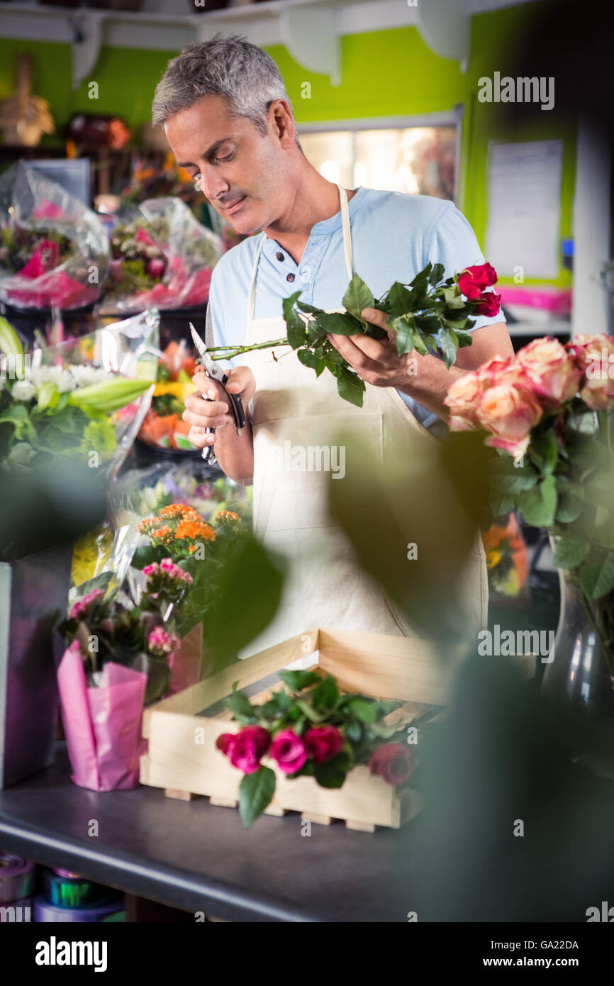 Male florist trimming stems of flowers - Stock Image