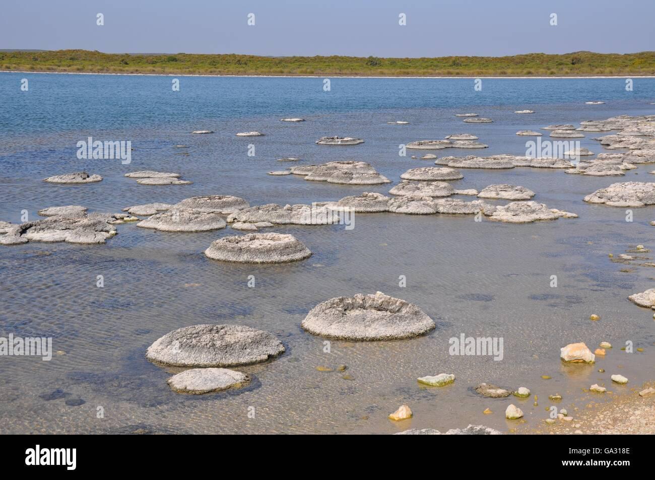 Marine Fossils Stock Photos & Marine Fossils Stock Images ...