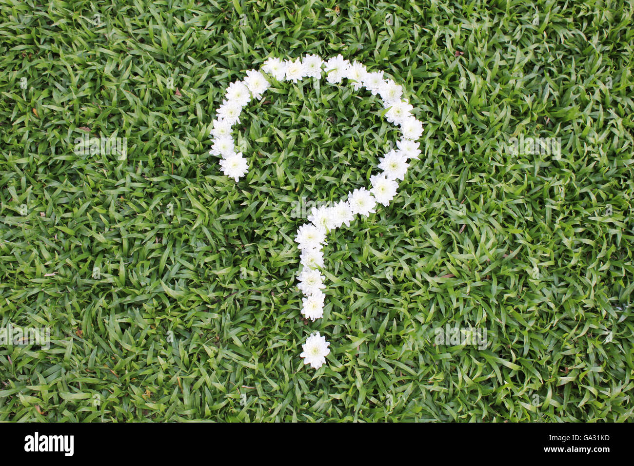 Question mark made from daisy flowers on green grass background, spring time. Stock Photo