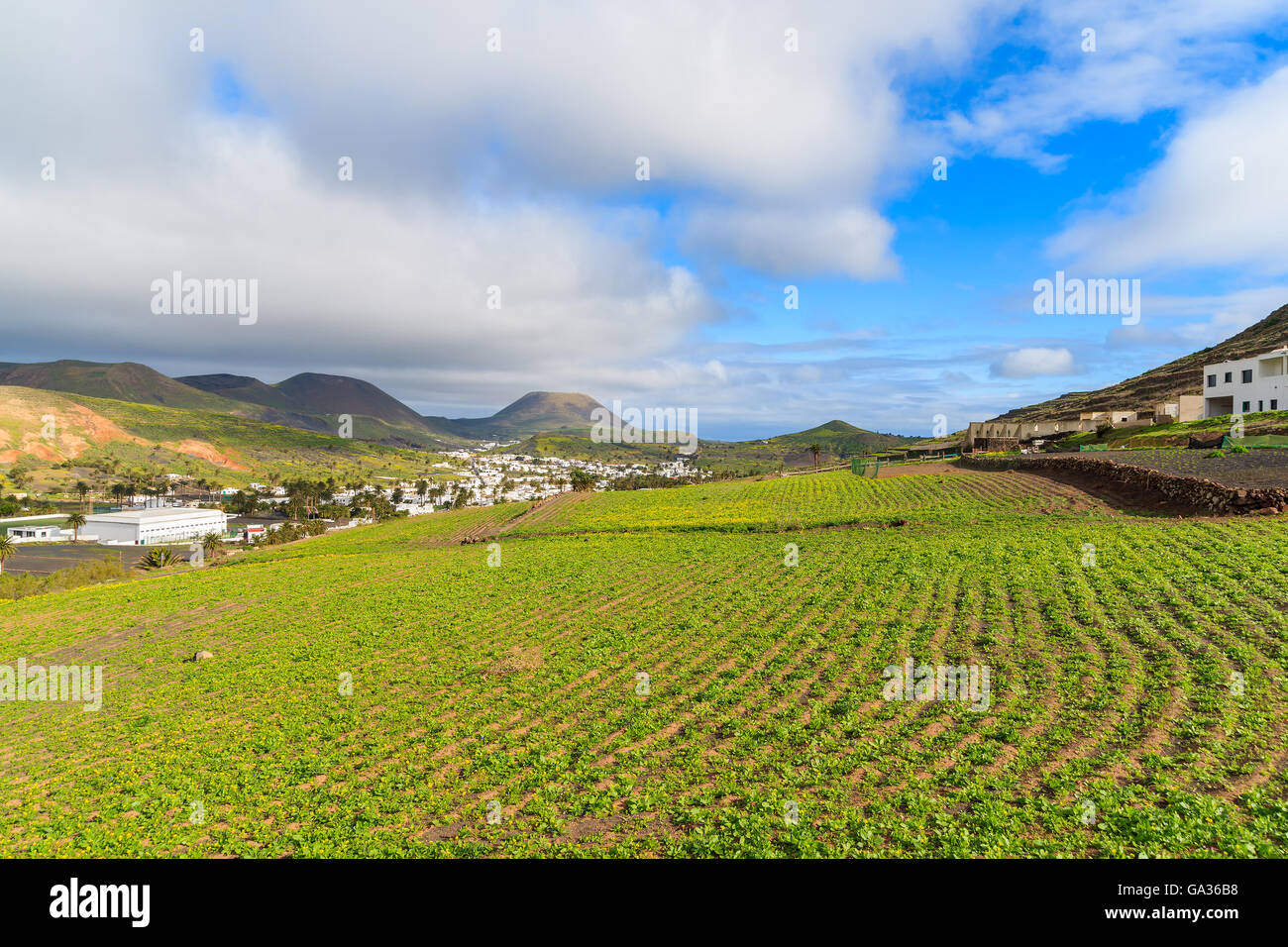 Green field in Haria mountain village, Lanzarote, Canary Islands, Spain - Stock Image