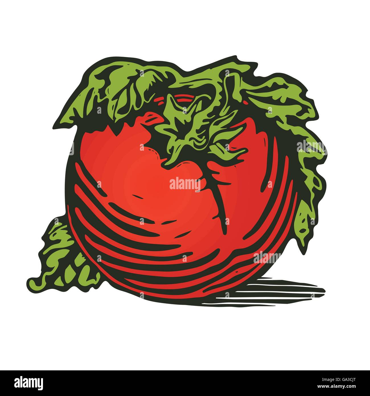 Tomato in woodcut print style - Stock Image