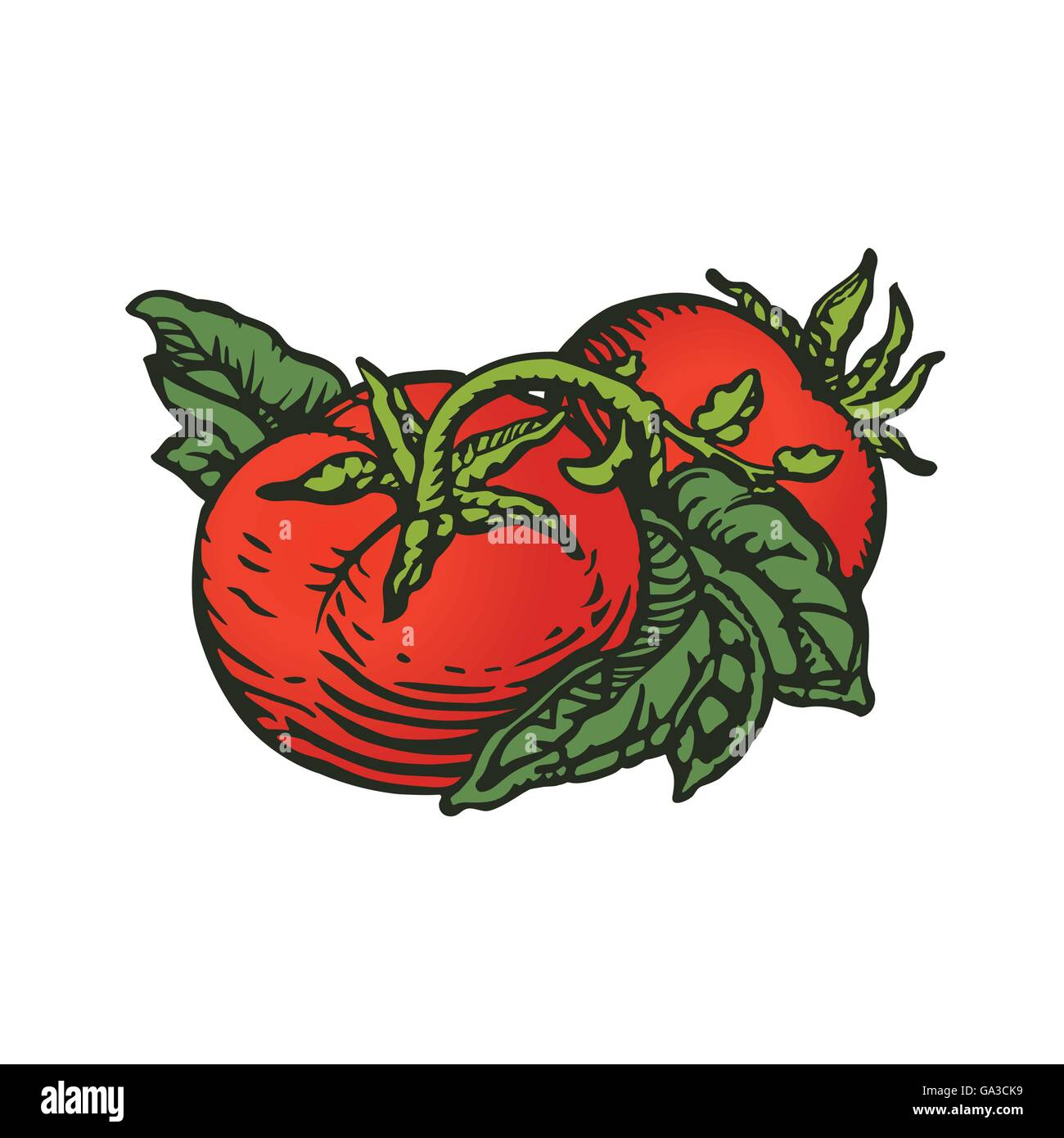 Couple of tomatoes in colors woodcut print style - Stock Image