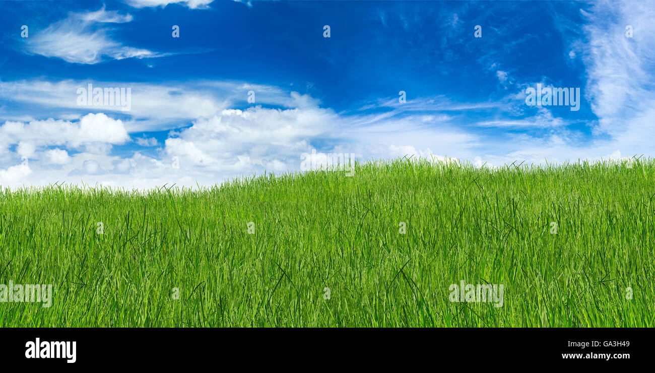 green grass landscape on blue cloudy sky - Stock Image