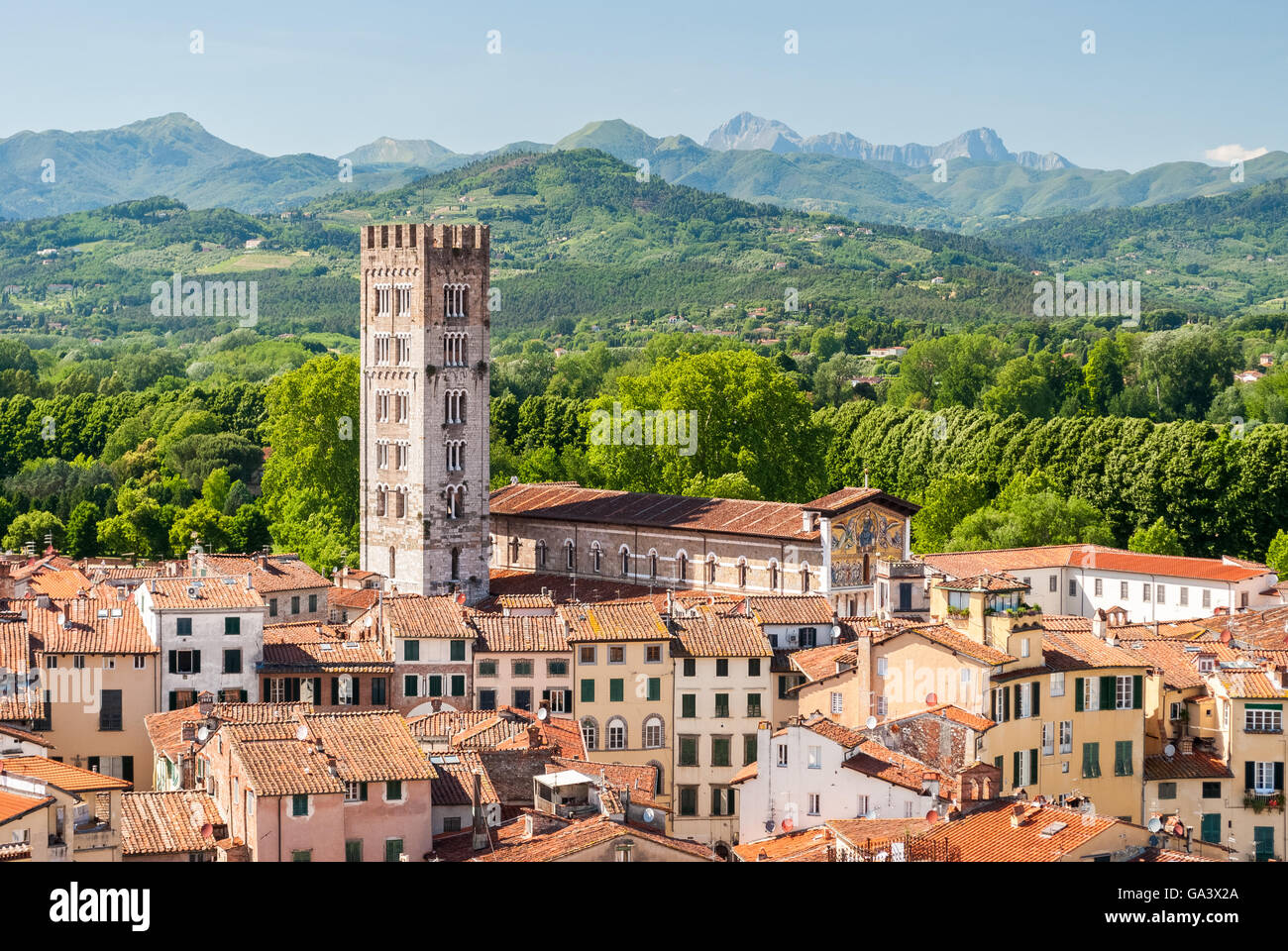 Aerial view of Lucca, in Tuscany, during a sunny afternoon; the bell tower belongs to the San Frediano church - Stock Image