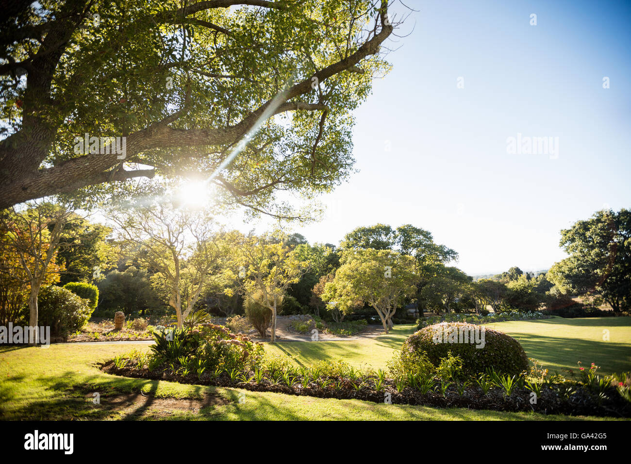 Picture of park with trees without people - Stock Image
