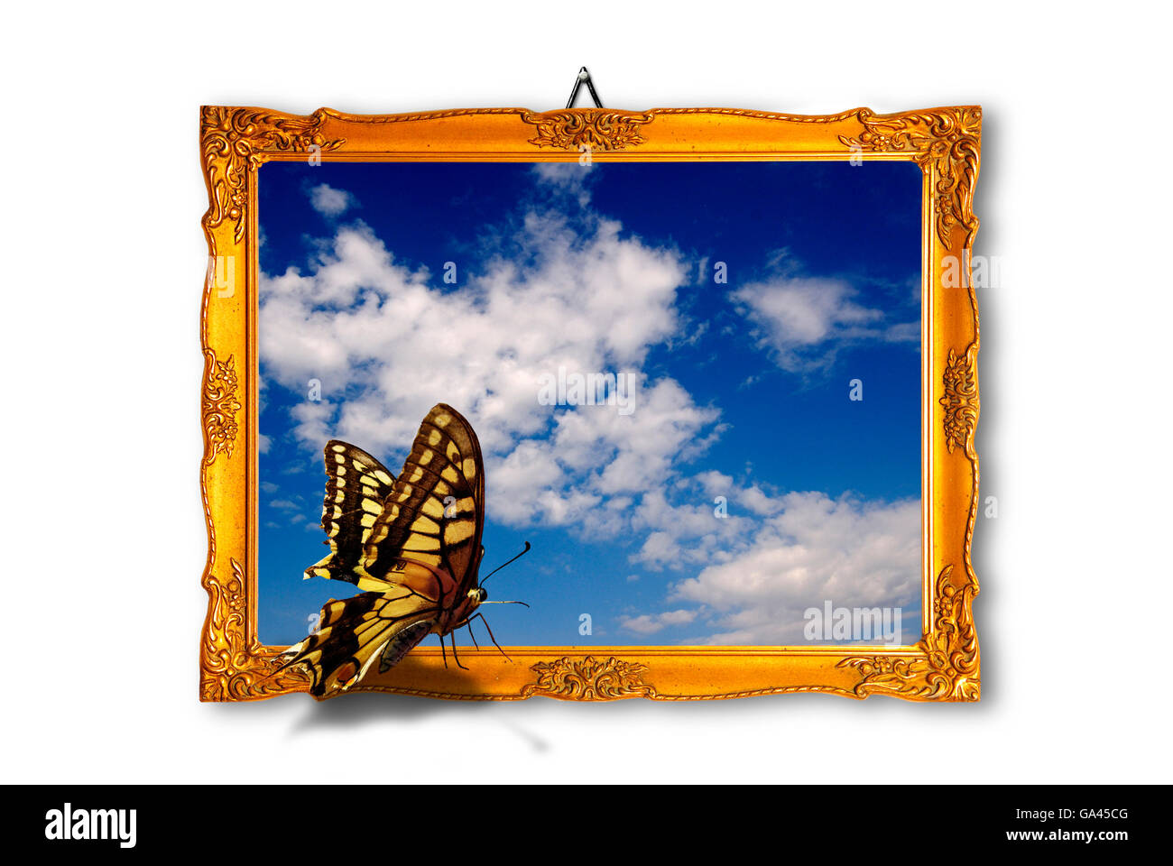 butterfly sitting on the edge of a  wood frame with a sky picture - Stock Image