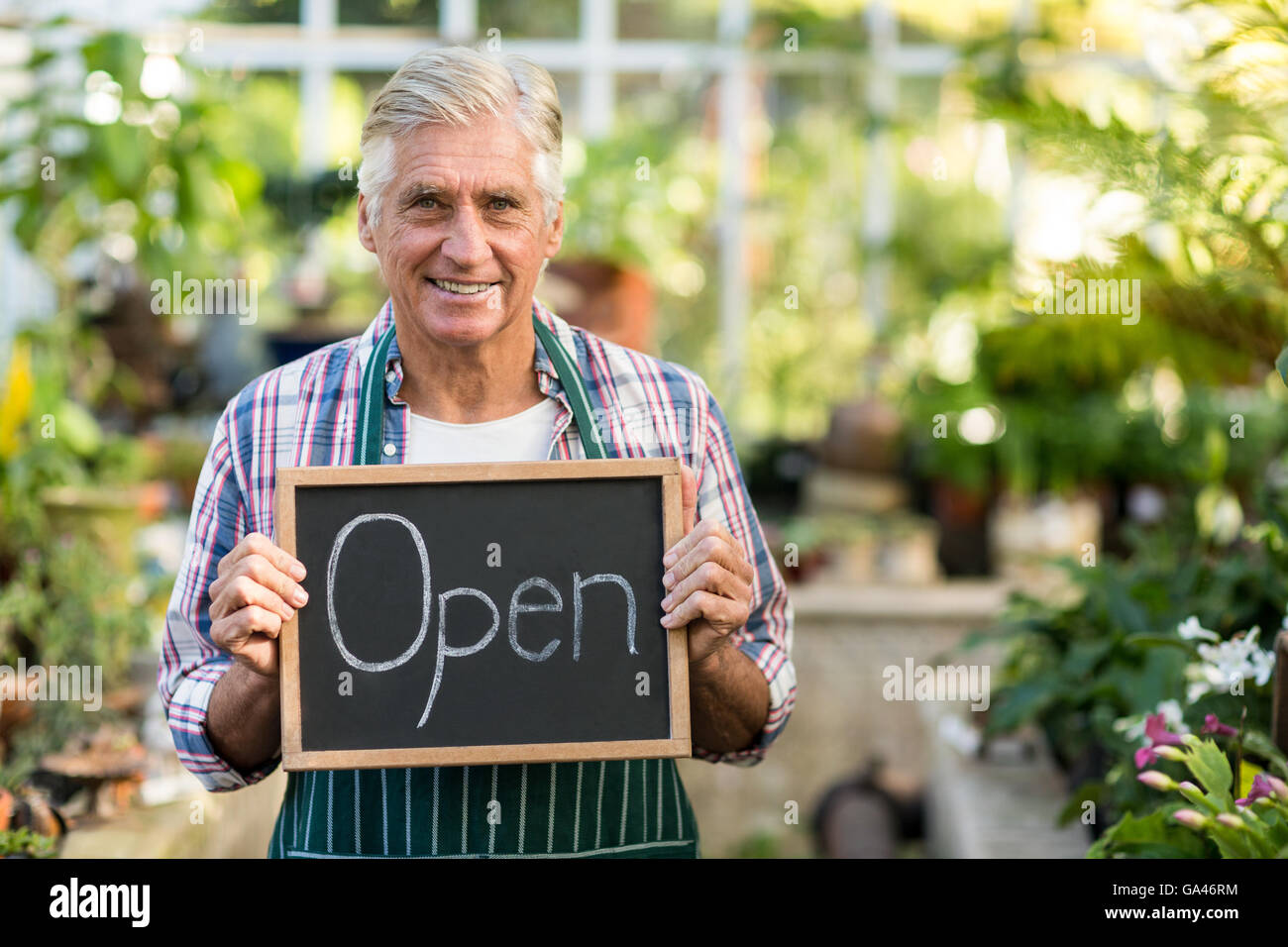 Mature owner holding open sign placard at greenhouse - Stock Image