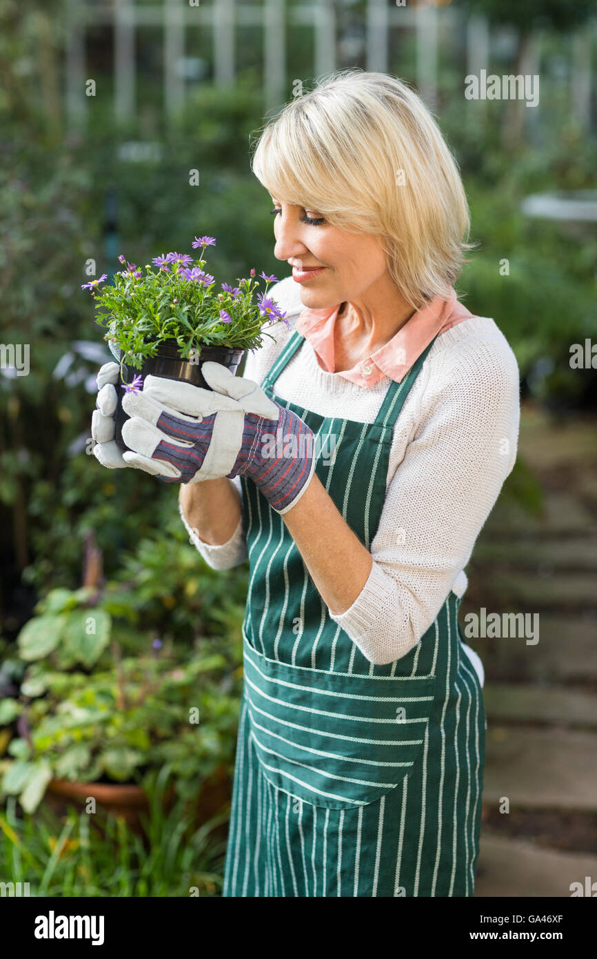 Female gardener smelling potted flowers - Stock Image