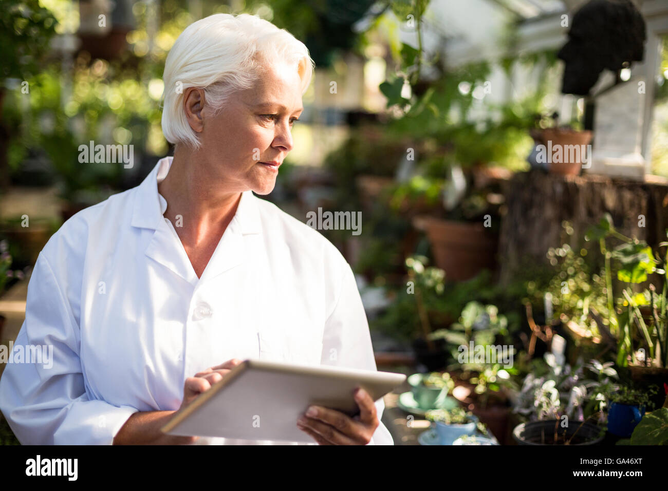Female scientist observing plants at greenhouse - Stock Image