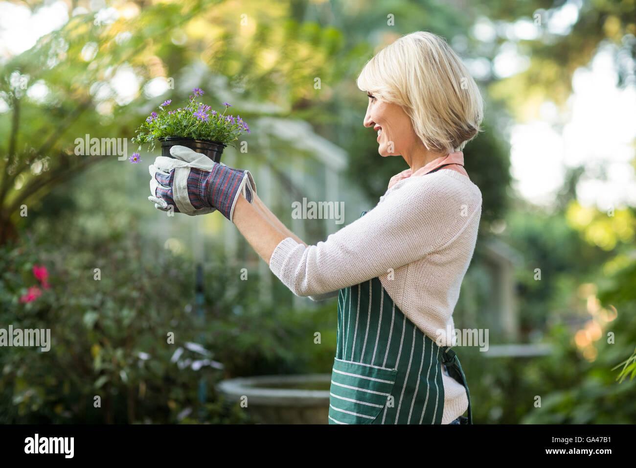 Mature female gardener holding flowering plant - Stock Image
