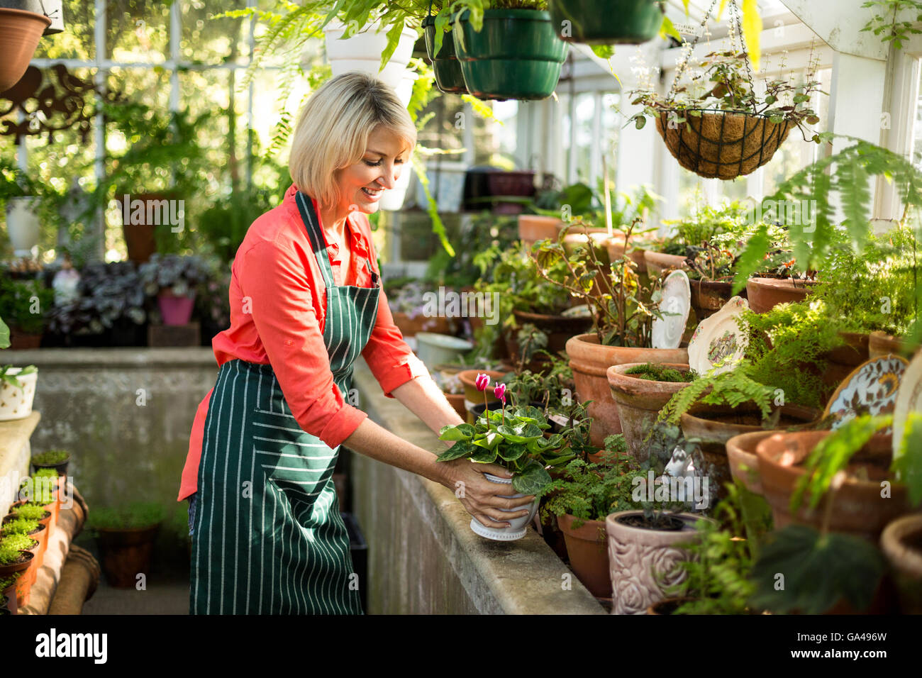 Mature woman holding potted plant at greenhouse - Stock Image